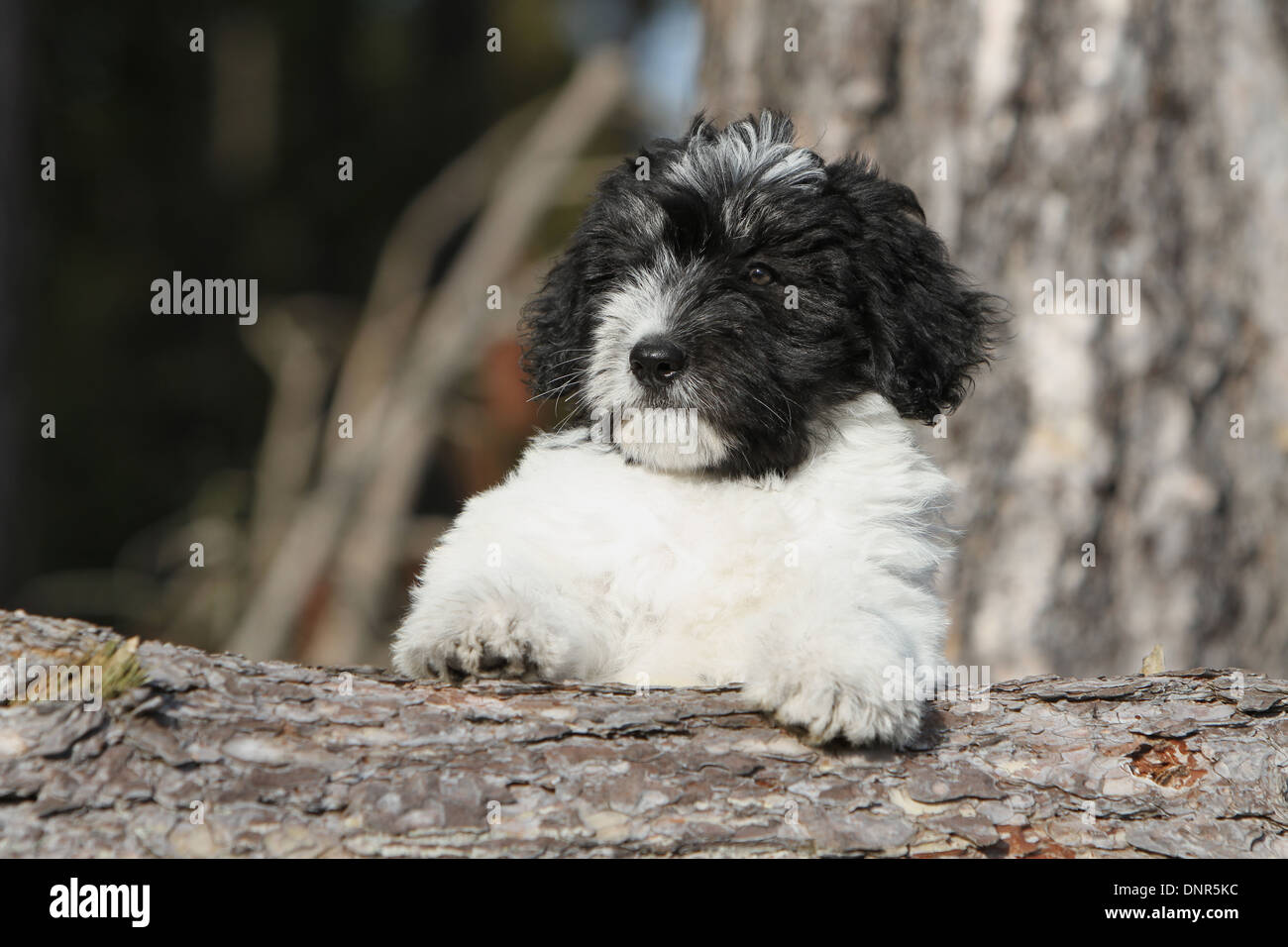 Cute Small White Dog On Tree Stump Stock Photos Cute Small White