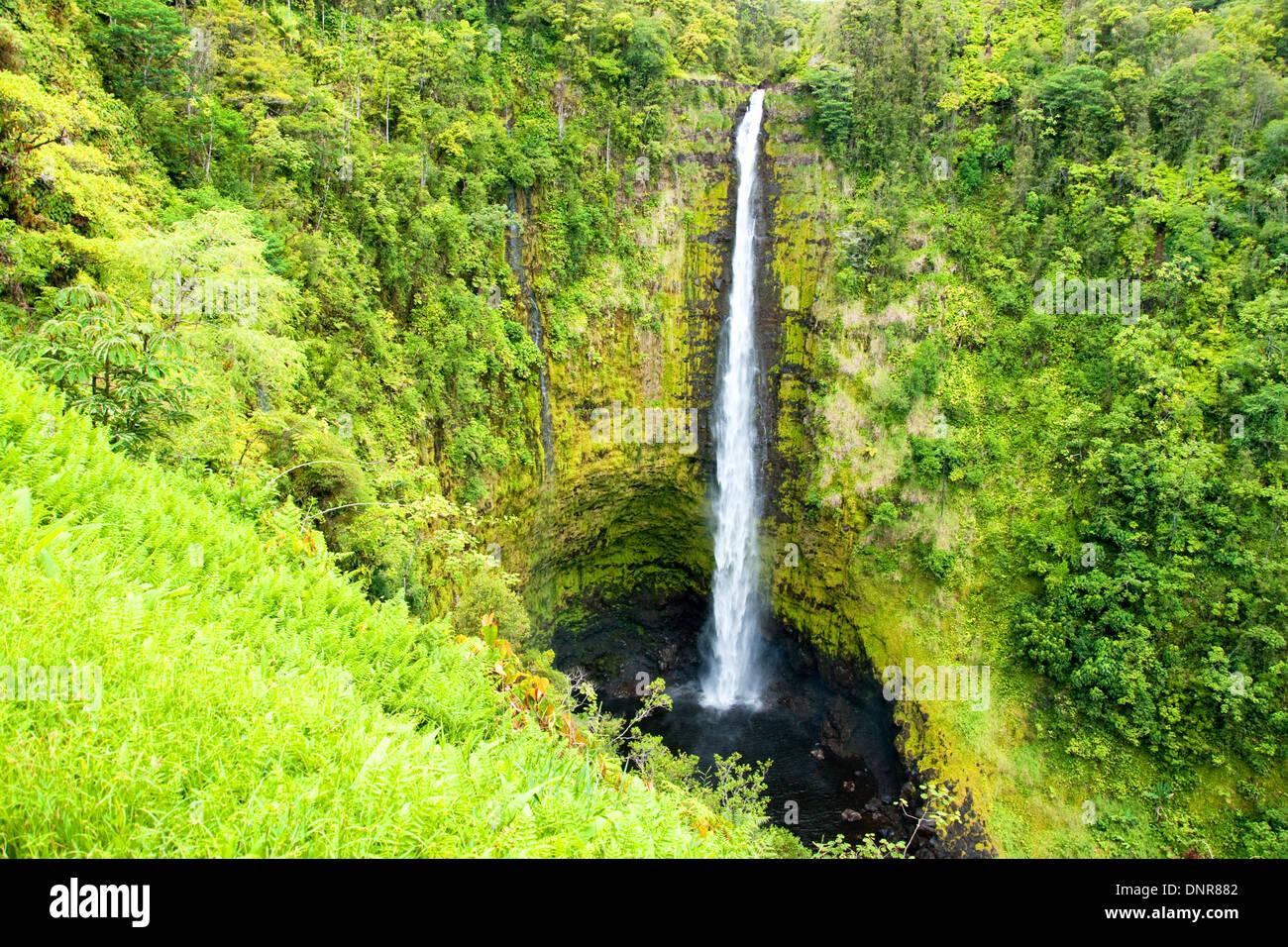 Rainforest On The Big Island: Hawaii Tropical Rain Forest Rainforest Stock Photos