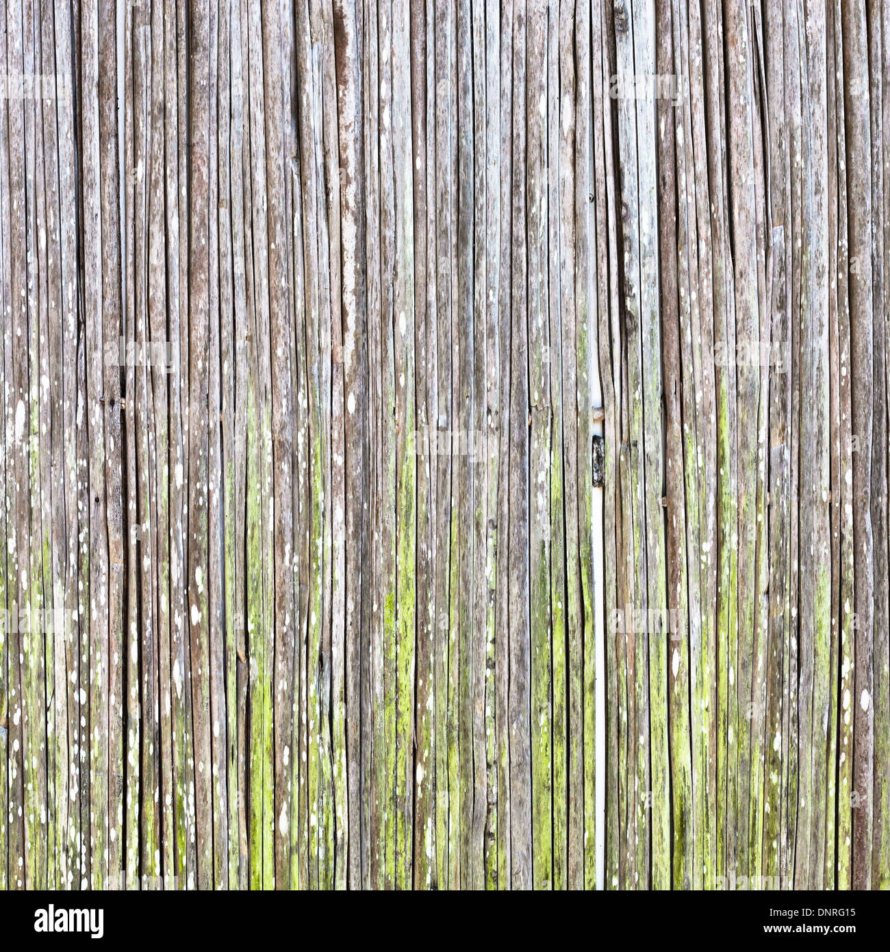 Reed wood fibres as a detailed background - Stock Image