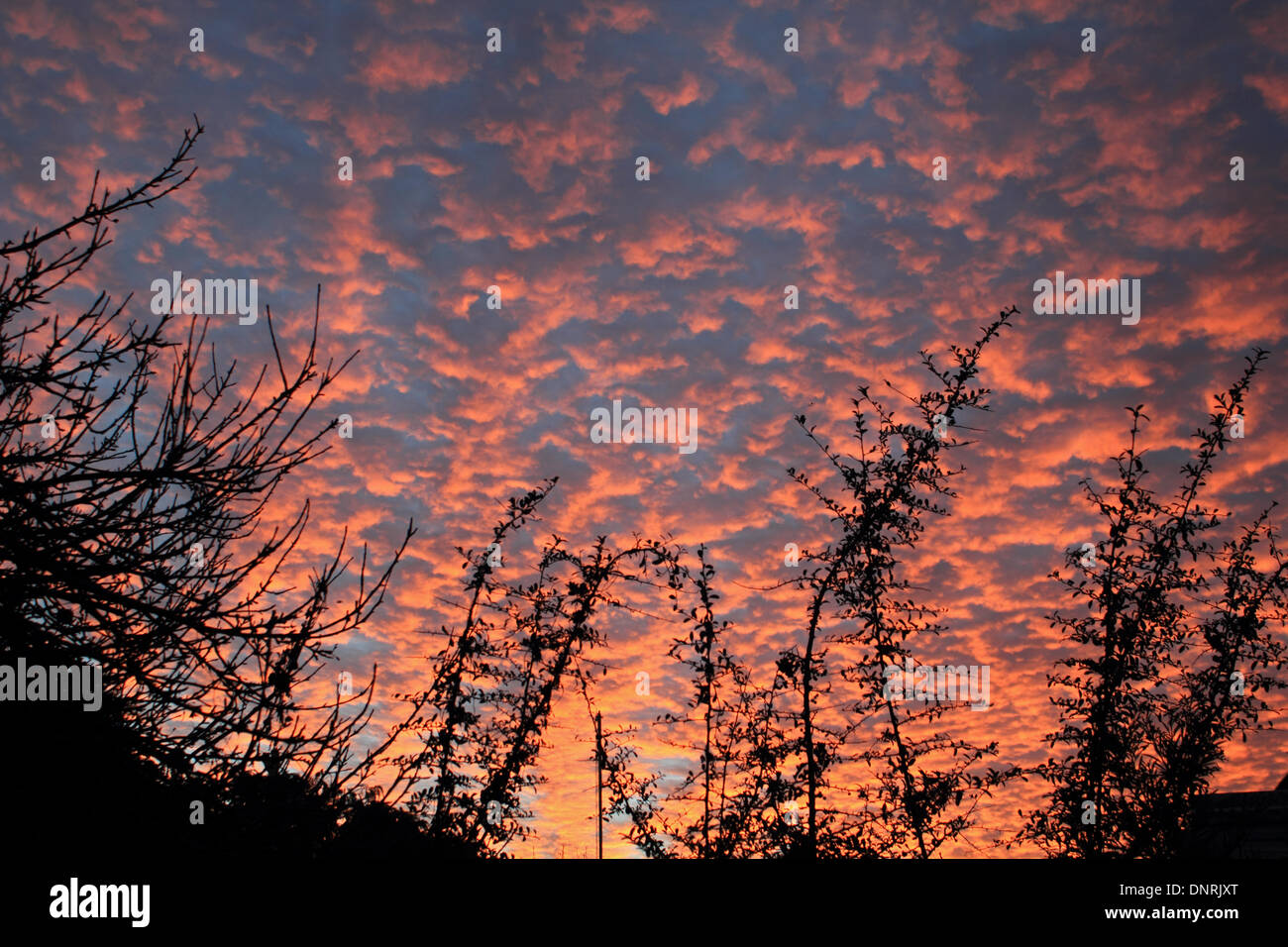 Epsom, Surrey, UK. 5th January 2014. Red sky in the morning - shepherds warning! Could the old English saying be Stock Photo
