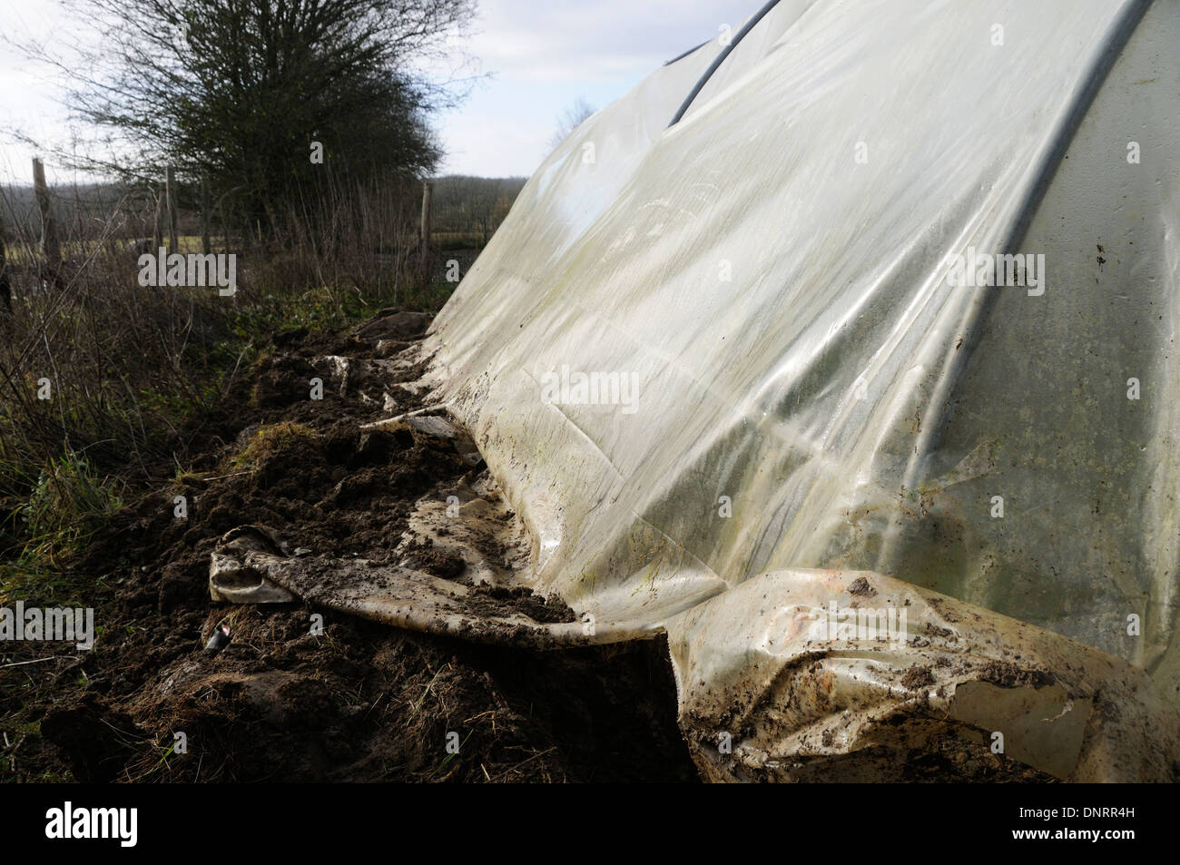 A used and torn polytunnel in need of replacement - Stock Image