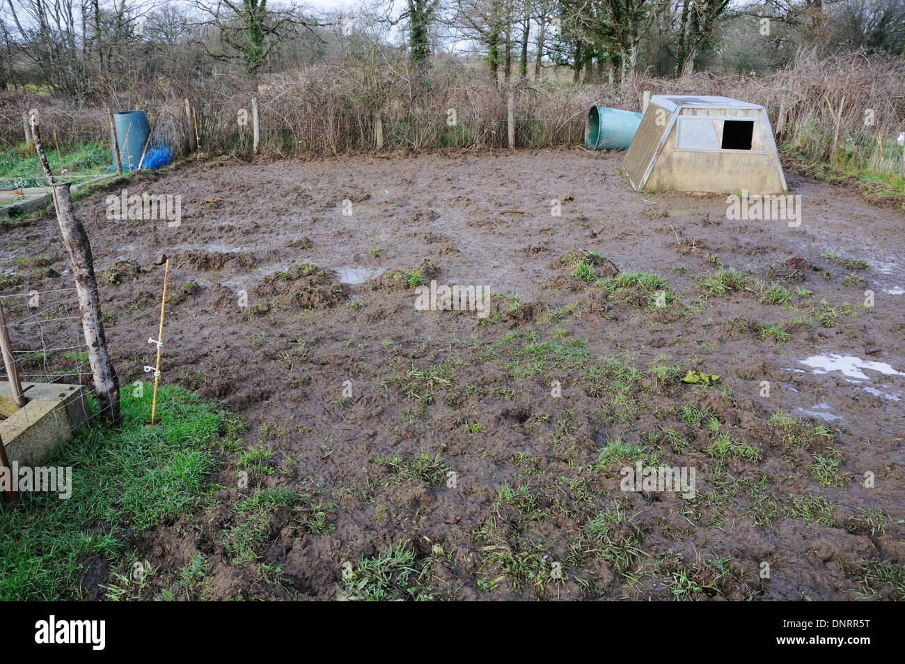 Pig arc in a very muddy field Stock Photo