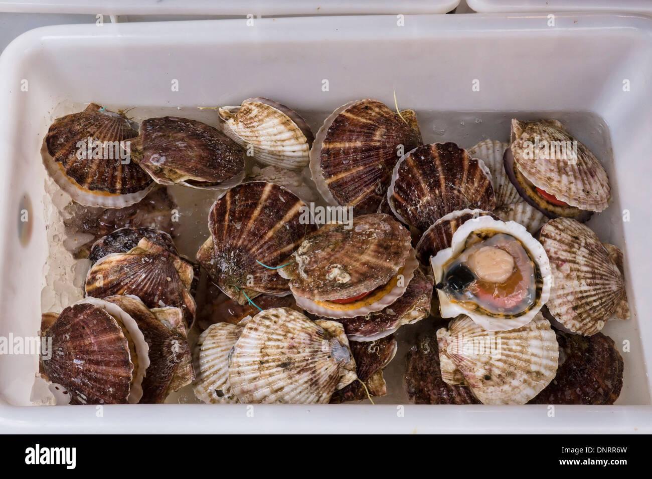 Box of Scallops, Lantau Island, Hong Kong, China - Stock Image
