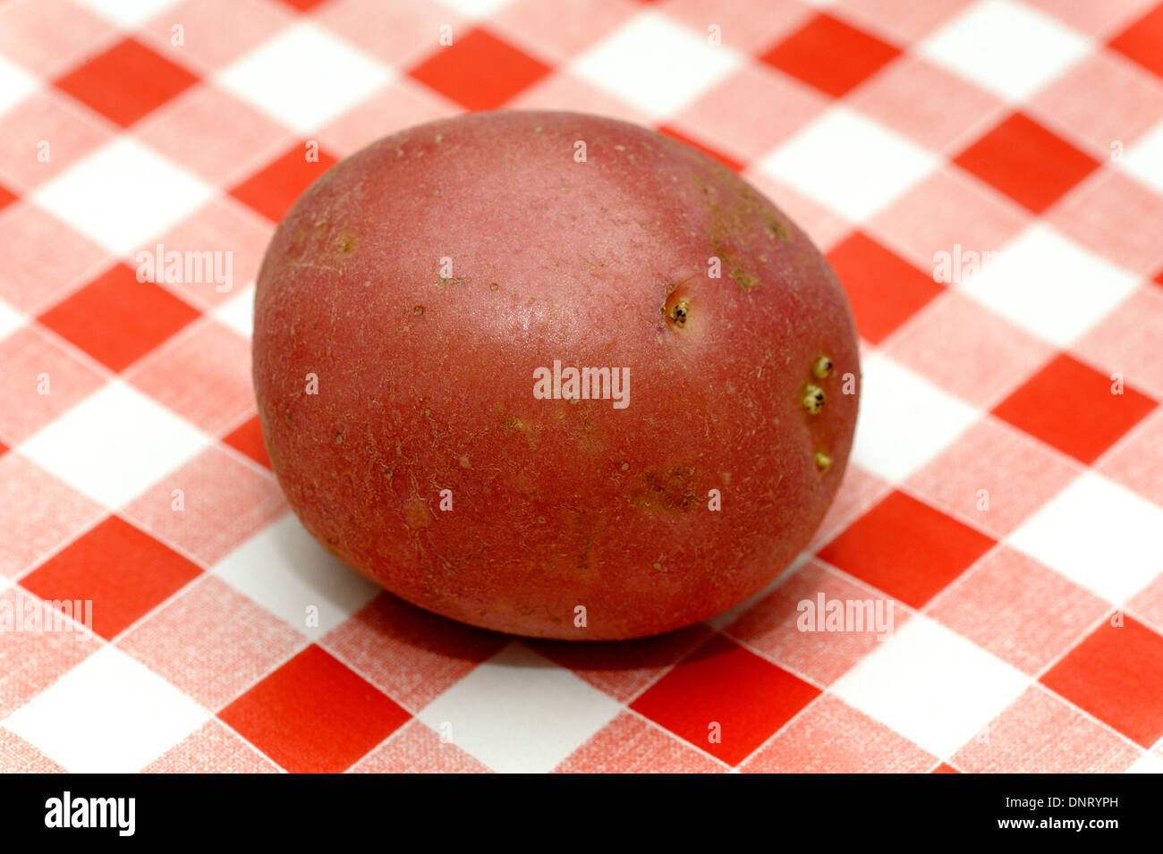 A red potato on a gingham table cloth background - Stock Image