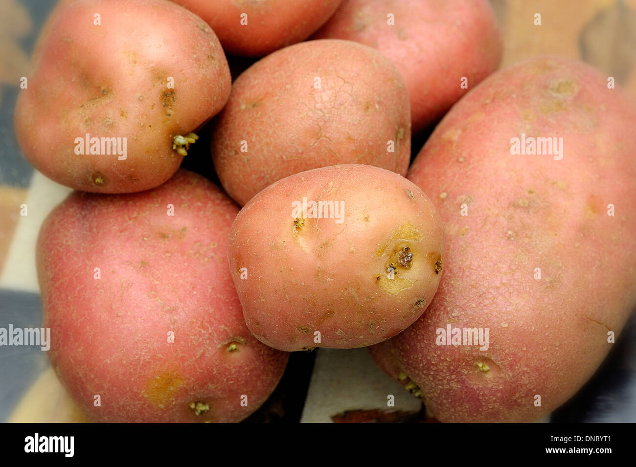 Red potatoes - Stock Image