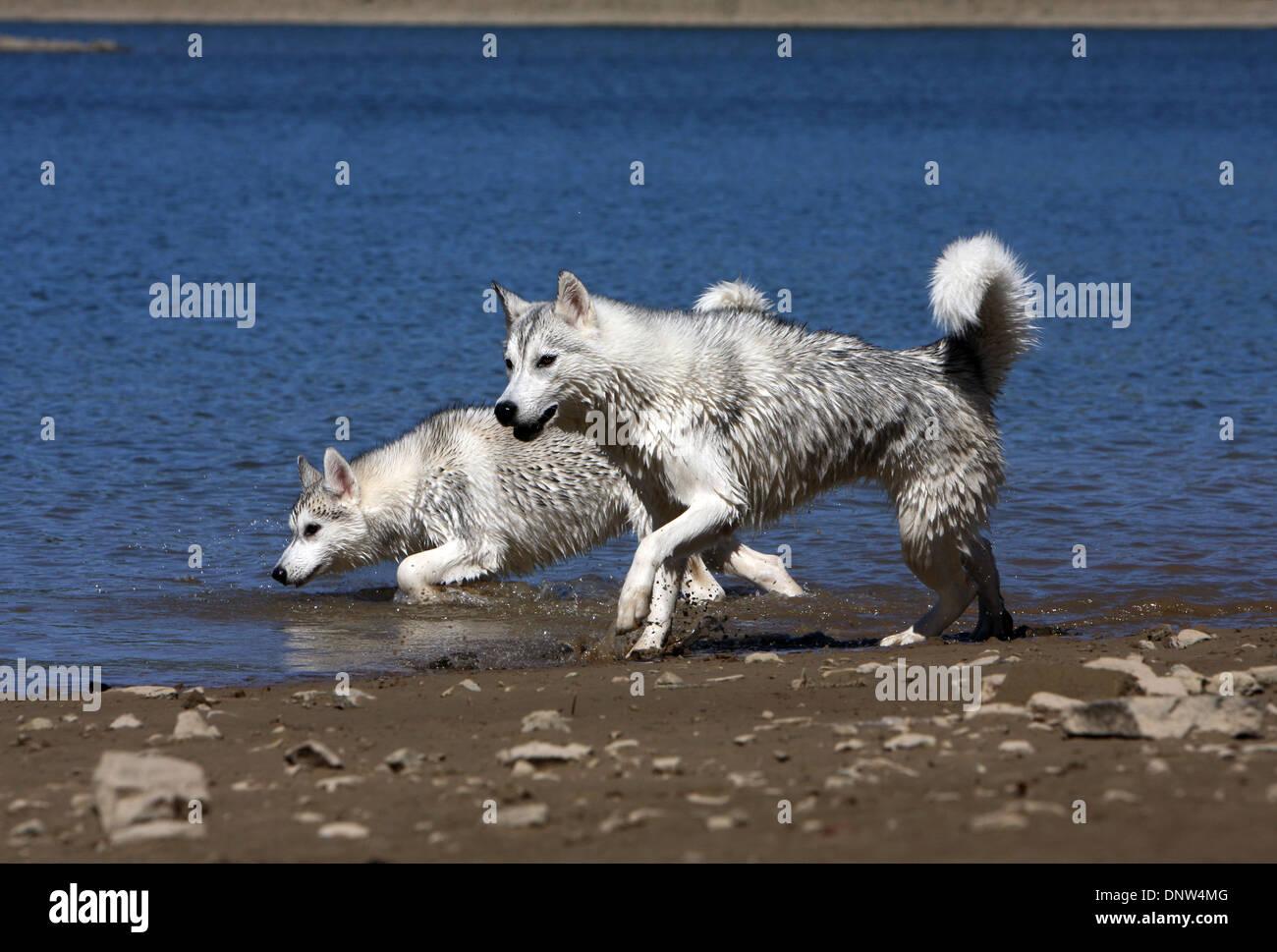 couple running dog lake stock photos & couple running dog lake stock
