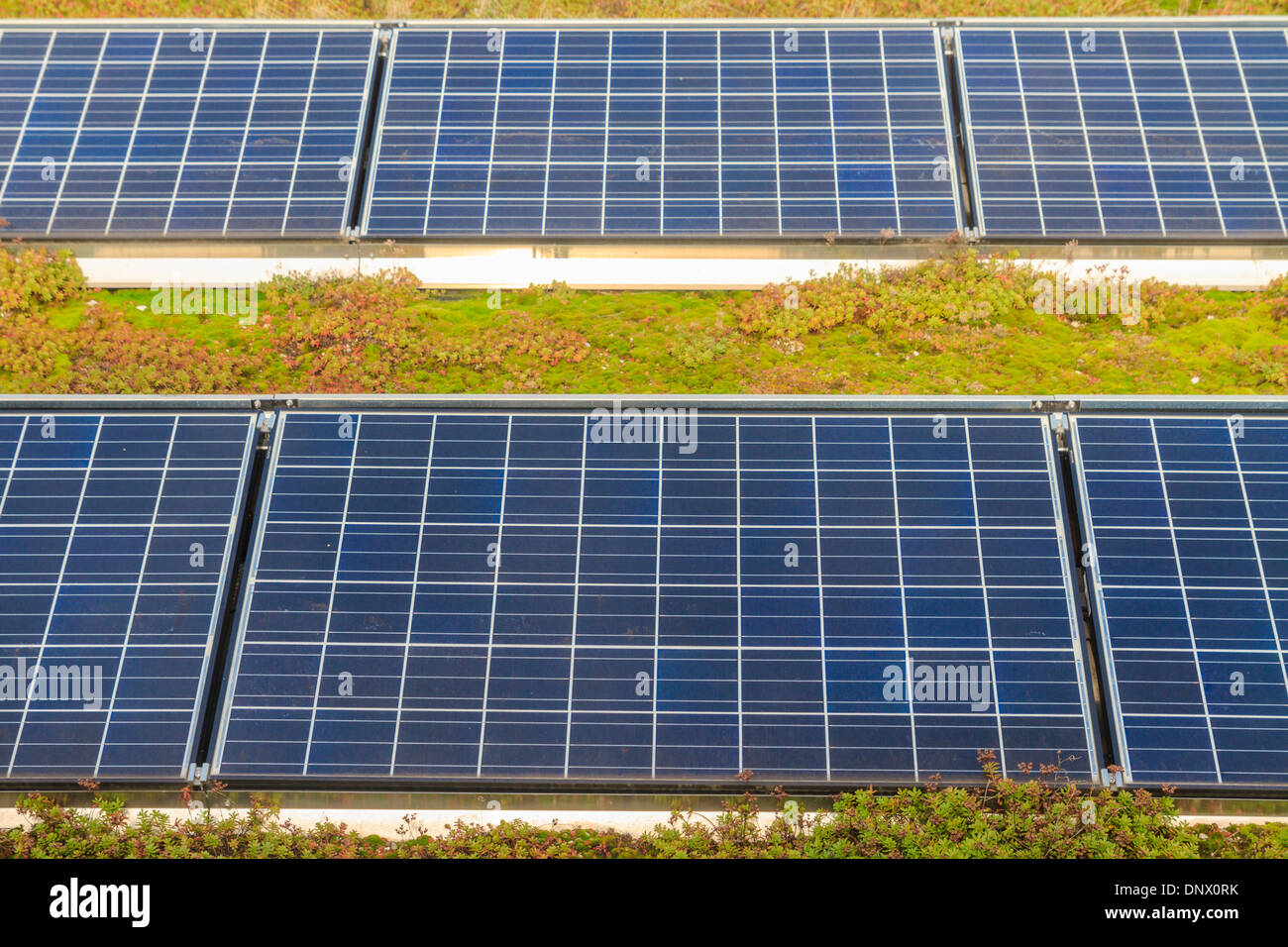 Solar panels on roof (with green garden) - Stock Image