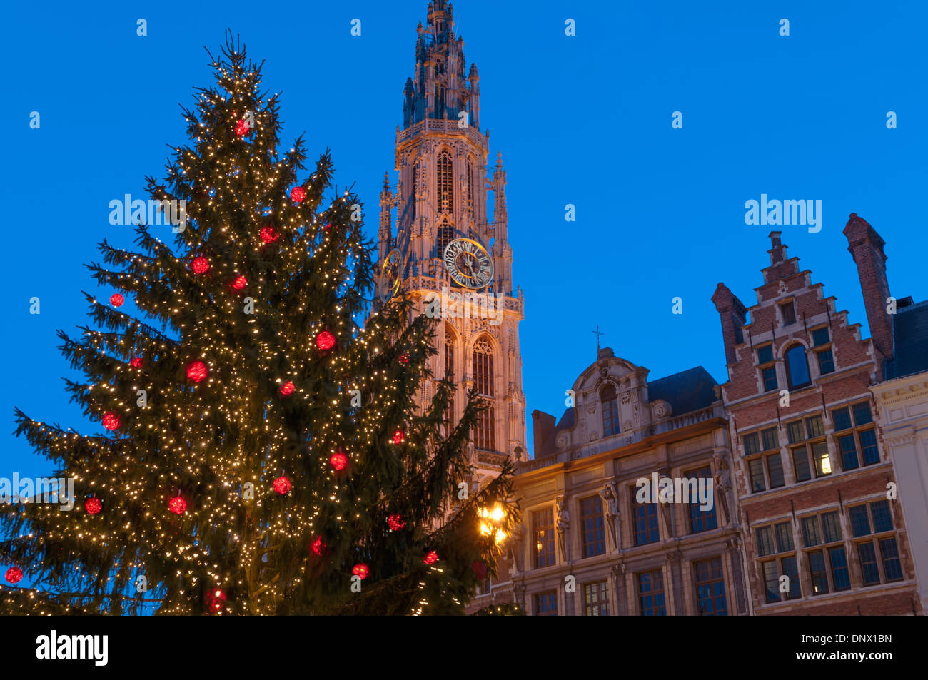 Xmas tree and cathedral spire, Christmas Market, Grote Markt, Antwerp Belgium - Stock Image