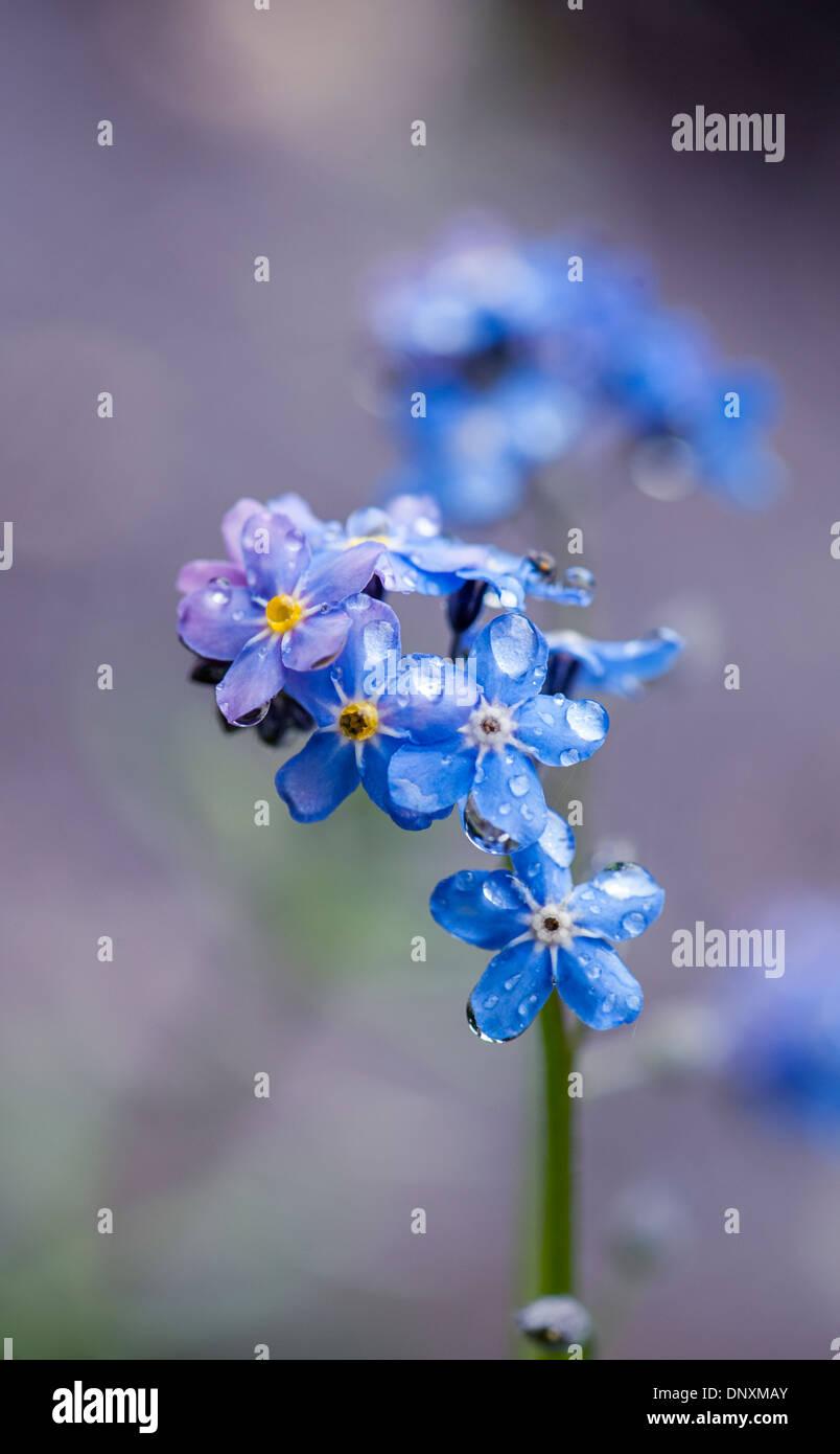 Tiny Blue Flowers Stock Photos Tiny Blue Flowers Stock Images Alamy
