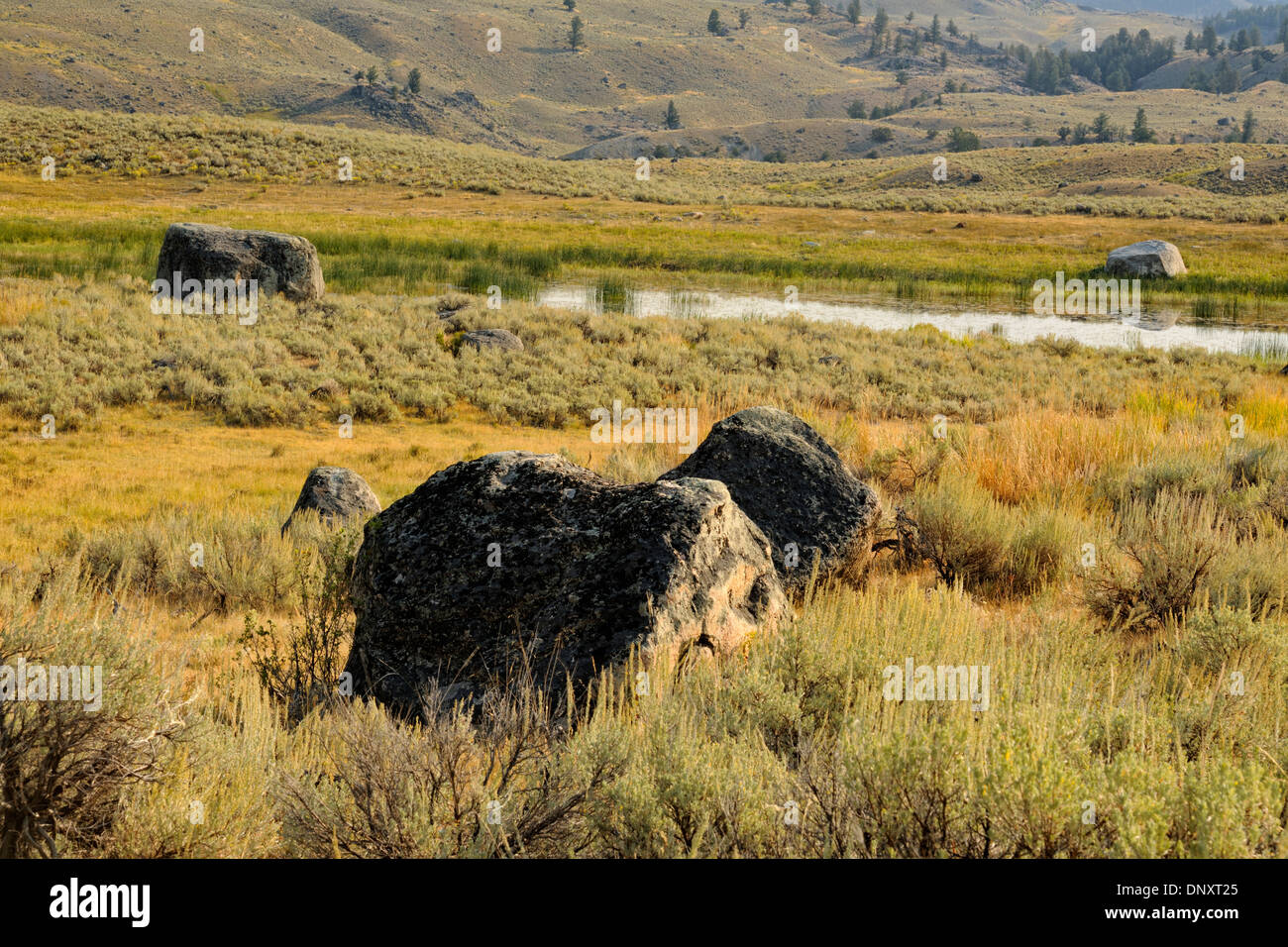 Erratic boulders and sage Ontario the Columbia Blacktail Plateau, Yellowstone NP, Wyoming, USA - Stock Image