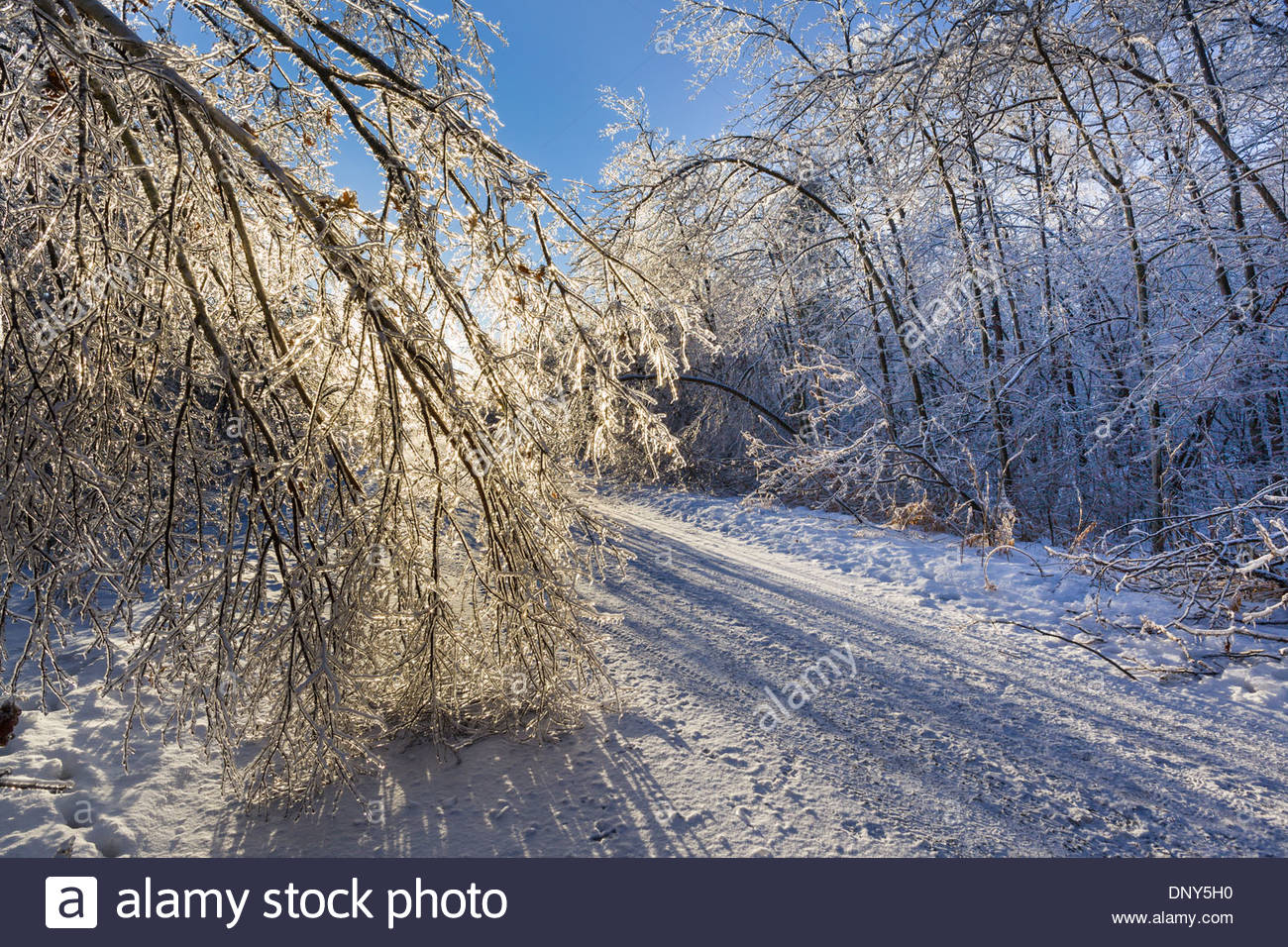 After a freezing rain tree branches made heavy by coating of ice bend over road in Rouge National Urban Park in Toronto Canada - Stock Image