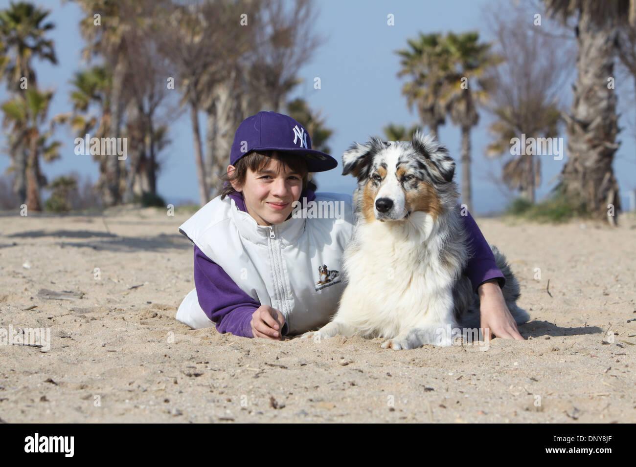 Dog Australian shepherd / Aussie  adult (blue merle) with a boy lying on the beach - Stock Image