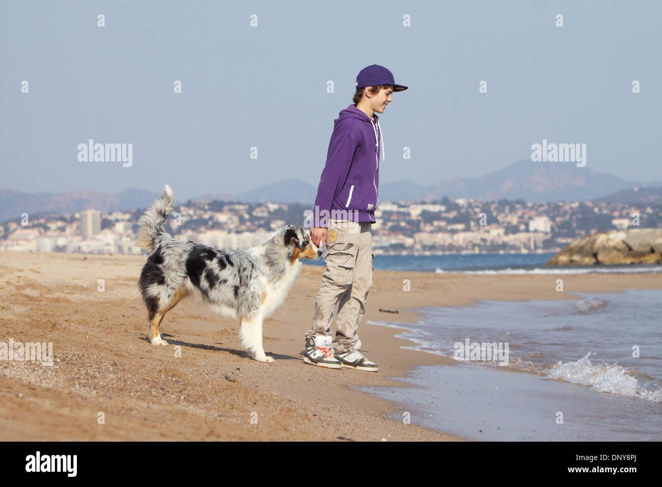 Dog Australian shepherd / Aussie  adult (blue merle) walking with a boy on the beach - Stock Image