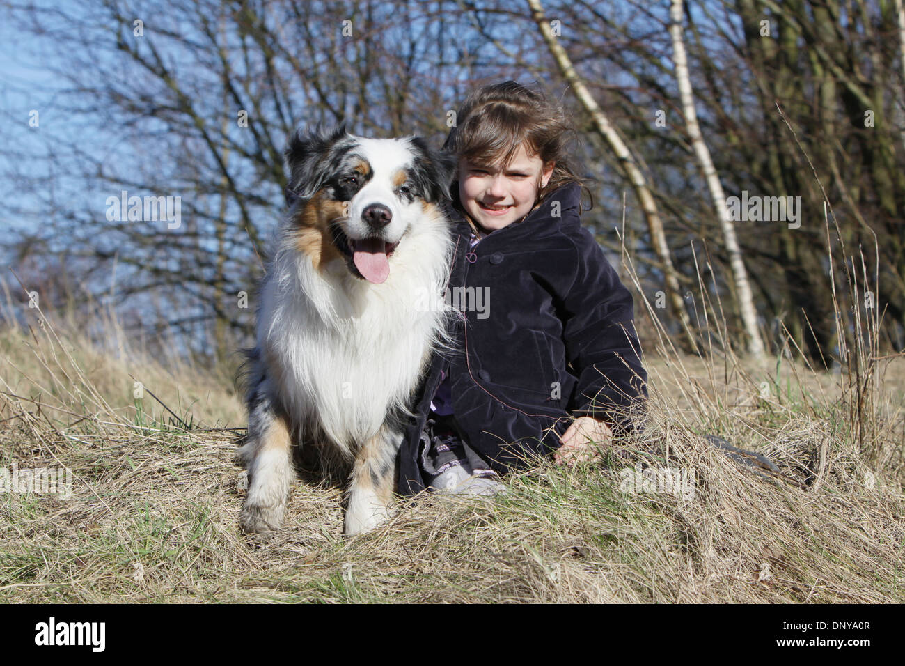 Dog Australian shepherd / Aussie  adult and a child in a meadow - Stock Image