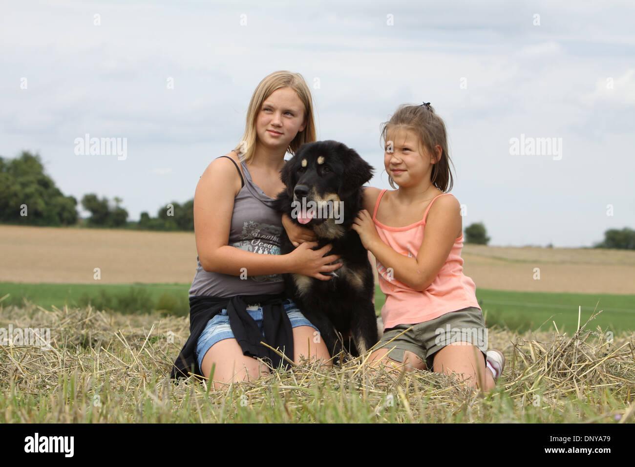 Dog Tibetan Mastiff / do-khyi / Tibetdogge adult and two girls in a field - Stock Image