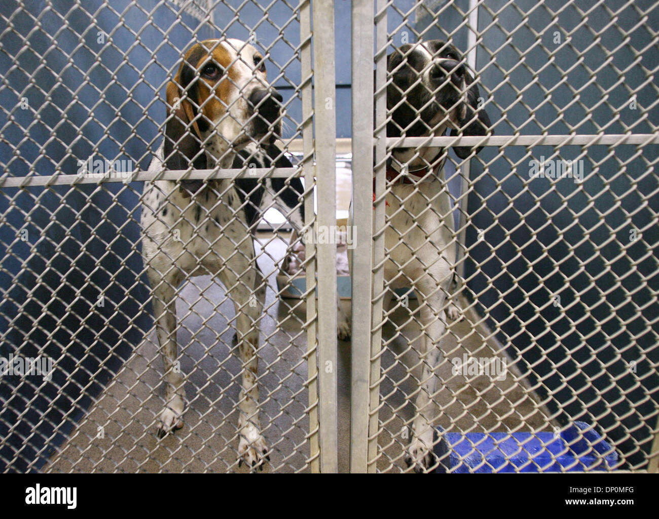Mar 27, 2006; Palm Beach, FL, USA; Potenial adoptees are caged together due to a lack of space at the Palm Beach - Stock Image