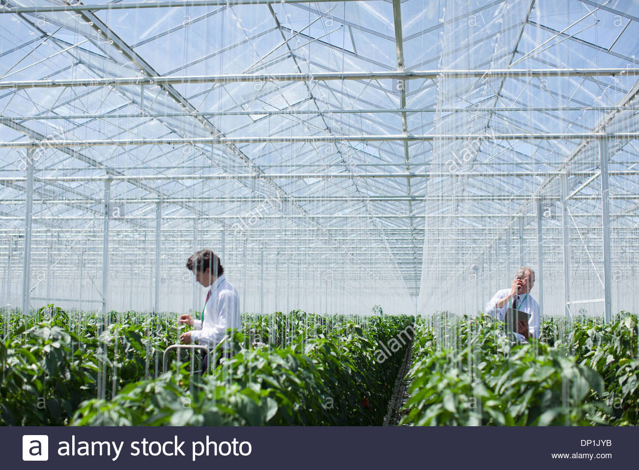 Scientists examining produce in greenhouse - Stock Image