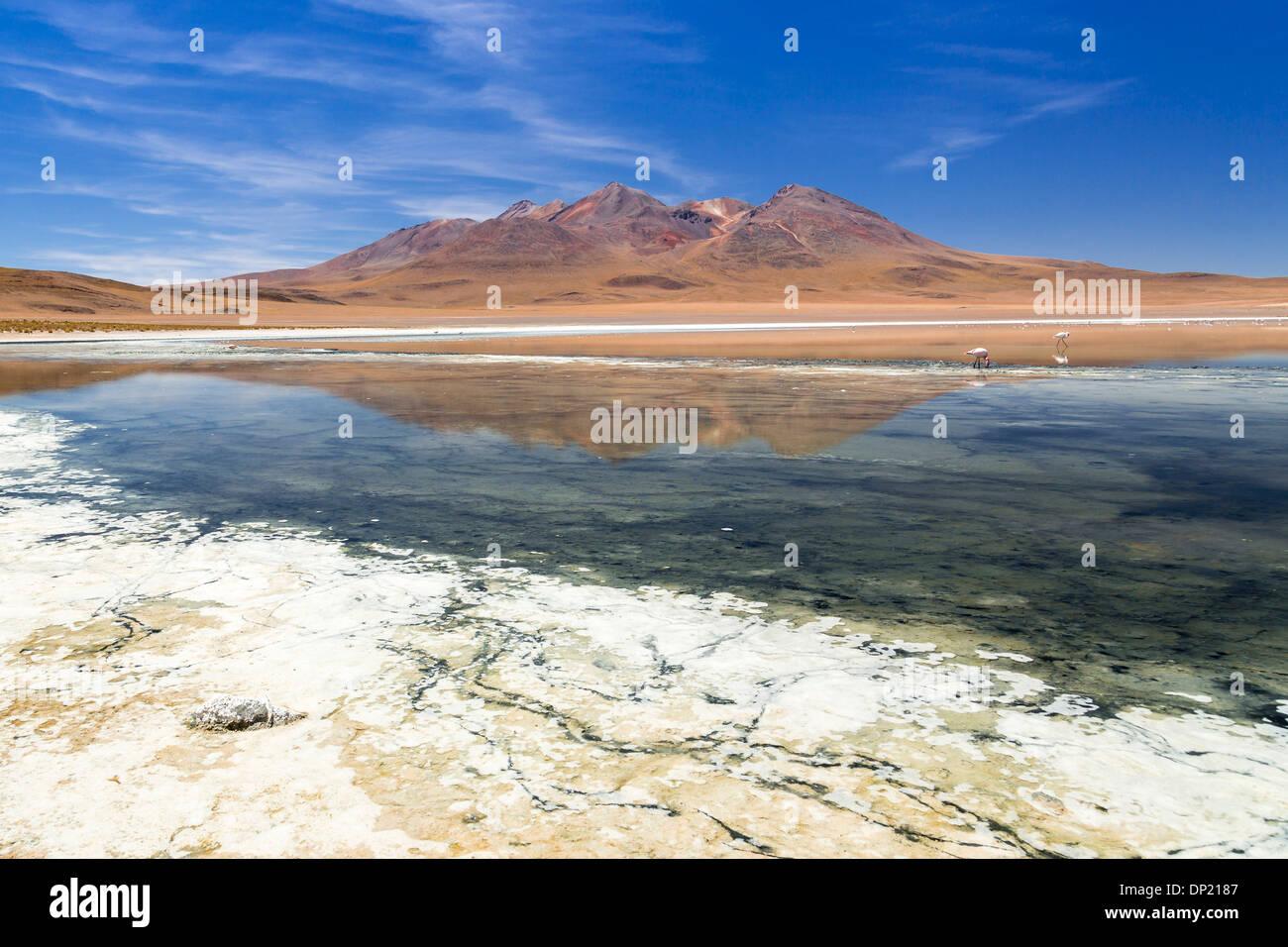 The lake Laguna Cañapa, Potosí Department, Altiplano, Andean Plateau, Andes, Bolivia - Stock Image