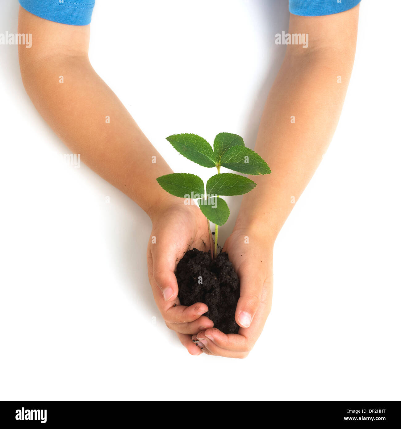 Boy holding seedling Stock Photo