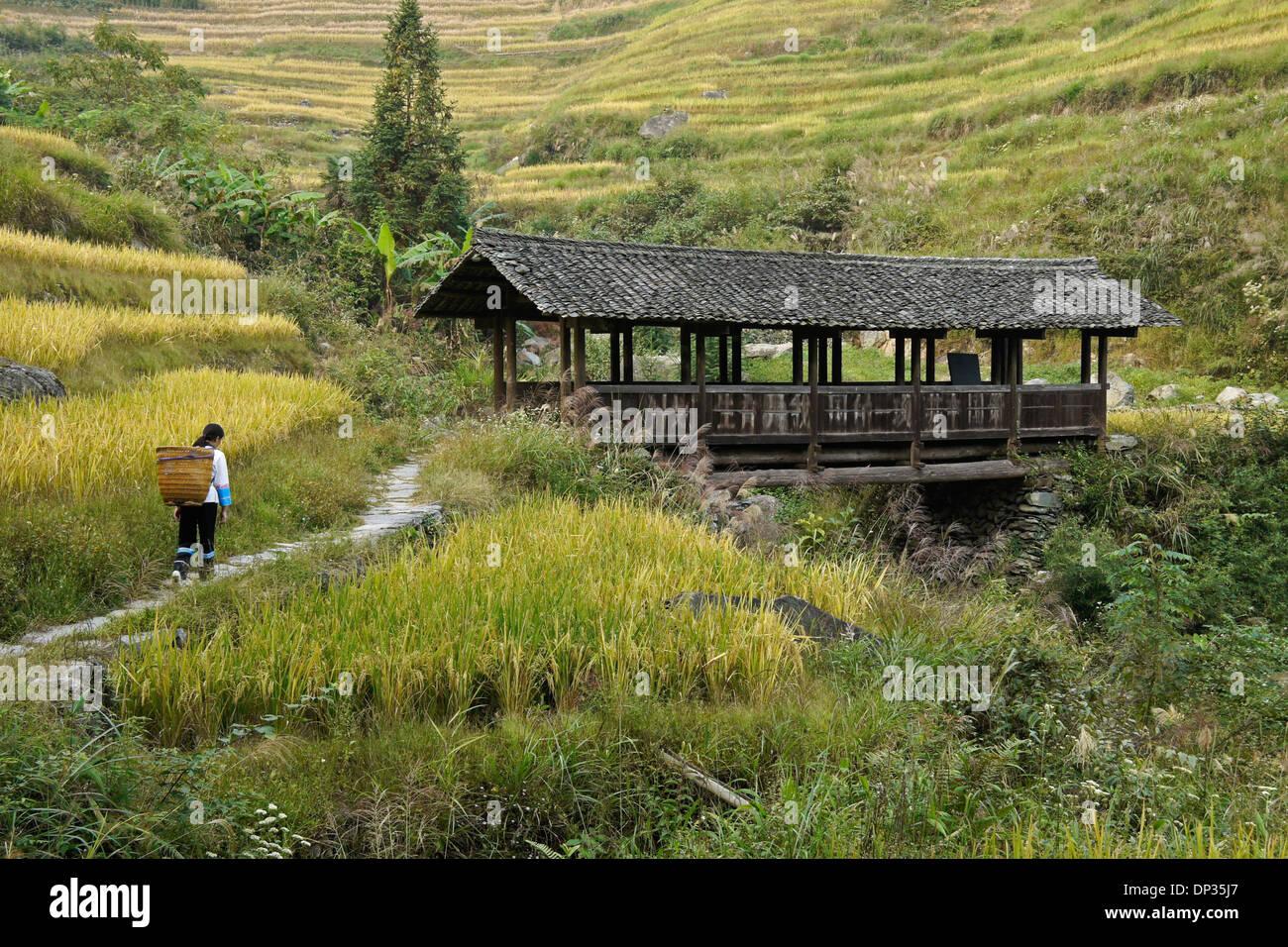 Old covered bridge in Longsheng (Longji) rice terraces, Guangxi, China - Stock Image