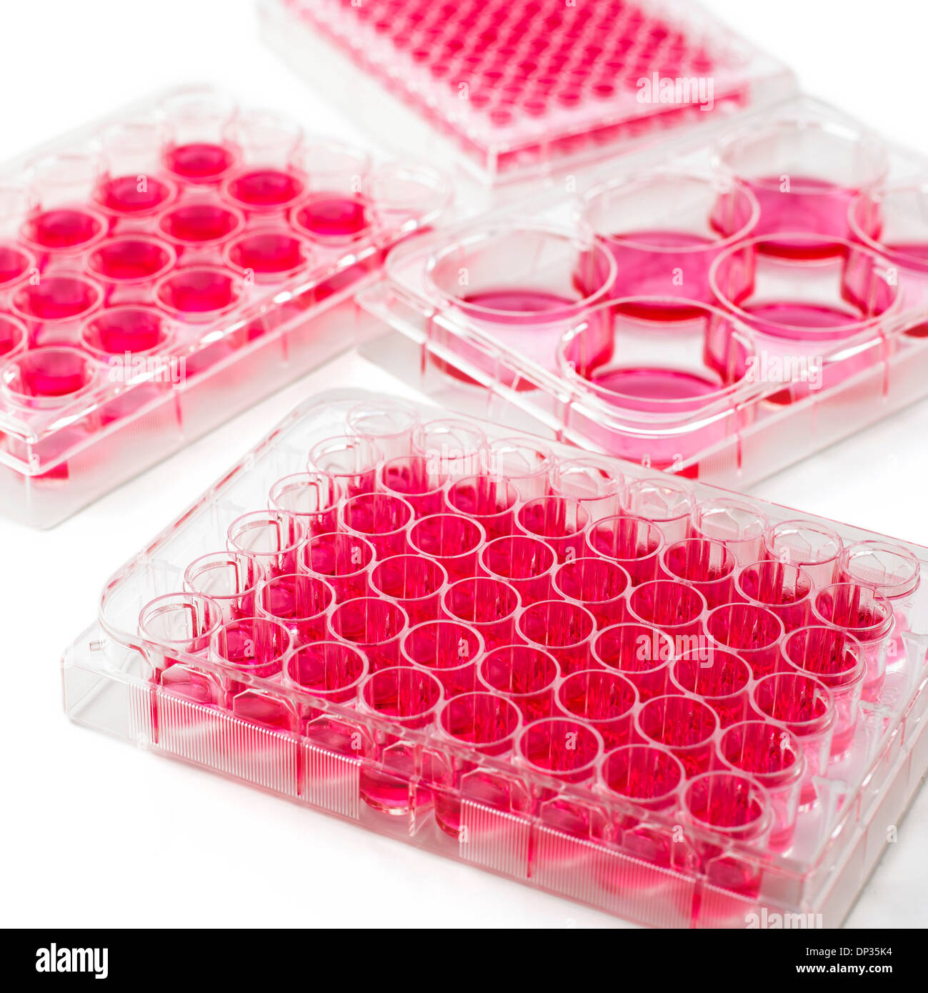 Cell culture plates - Stock Image