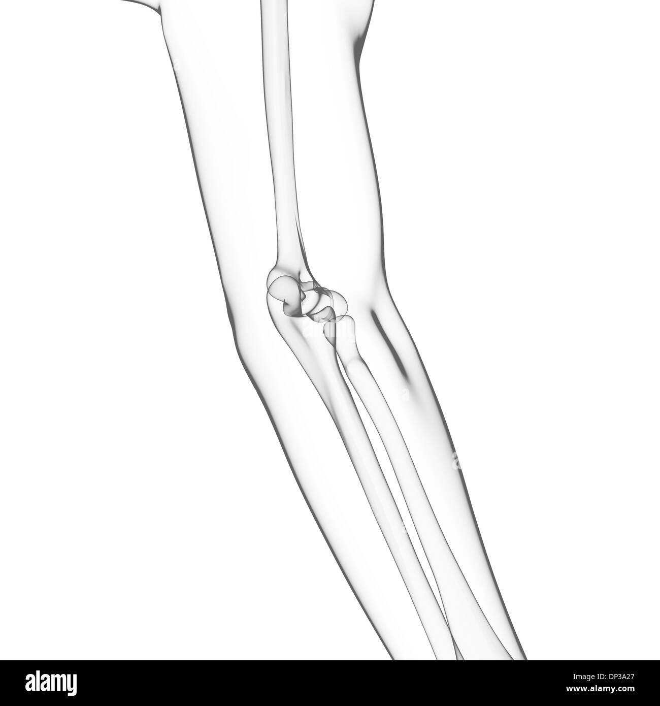 Arm Bones Black And White Stock Photos Images Alamy