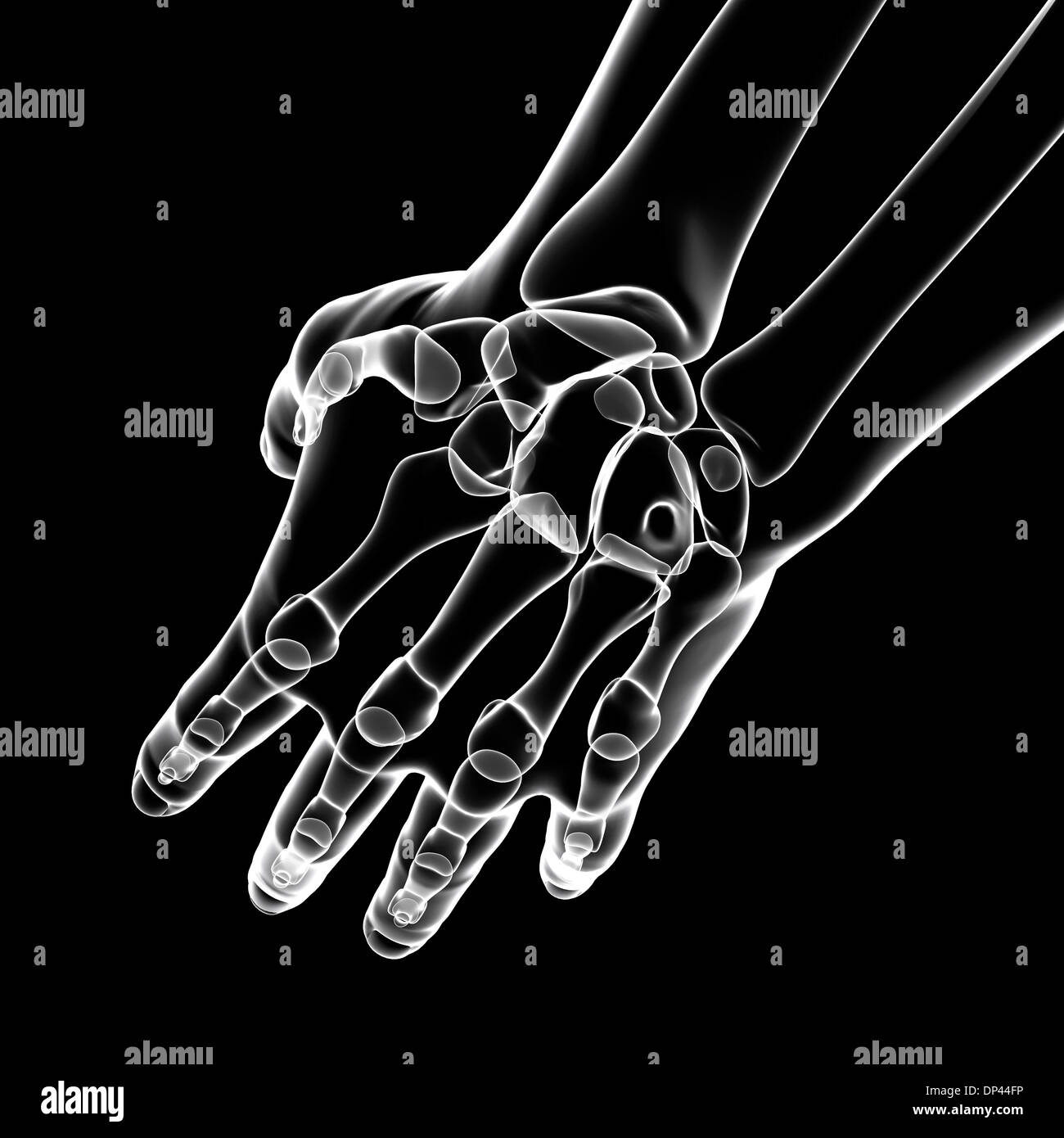 Human hand bones, artwork Stock Photo: 65244922 - Alamy