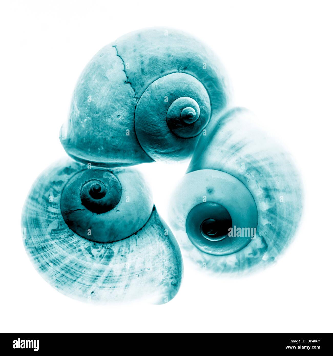 Close-up of Snail Shells, Studio Shot Stock Photo