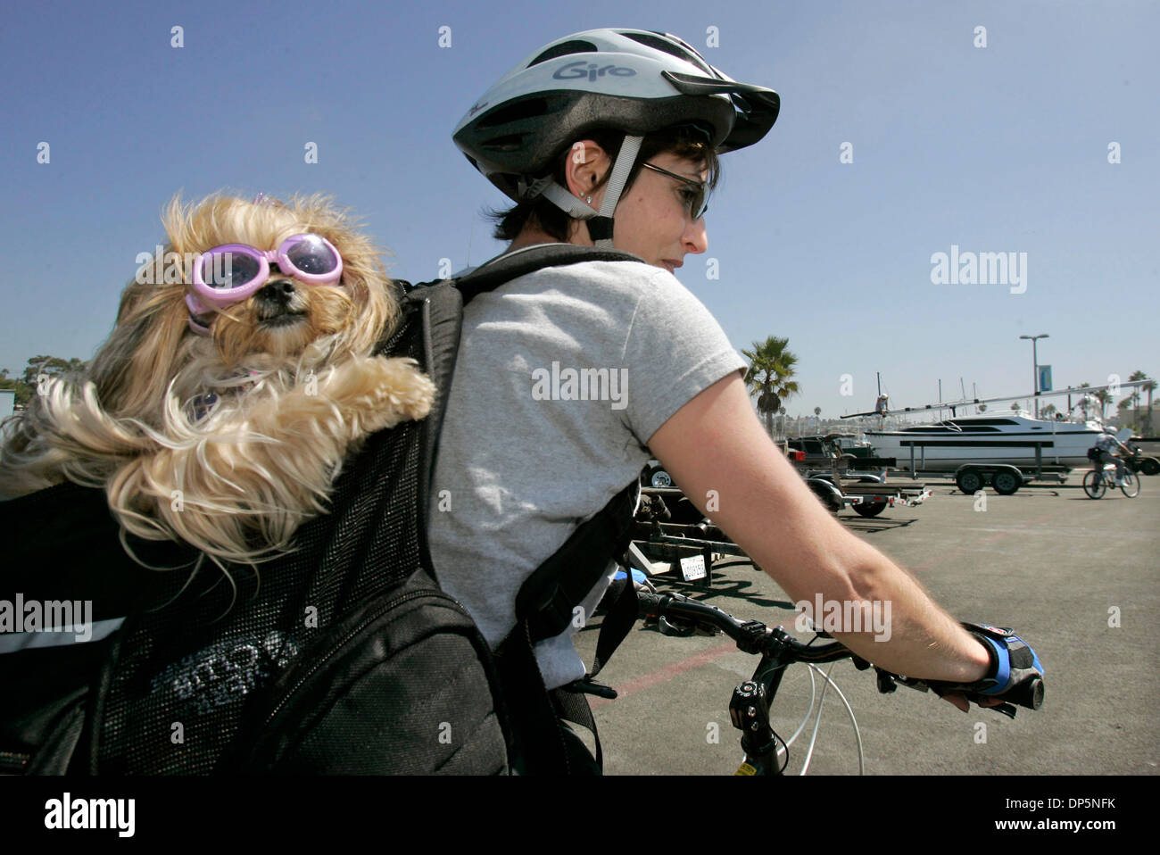 Sep 20, 2006; Oceanside, CA, USA; Oceanside resident ANN WATTS has her small dog named 'Shanti', that's wearing sunglasses, in her backpack as she takes a bike ride along the water at the Oceanside Harbor. The dog is a Yorki/Shih tzu  mix and seems to be enjoying itself. Mandatory Credit: Photo by Charlie Neuman/SDU-T/ZUMA Press. (©) Copyright 2006 by SDU-T - Stock Image
