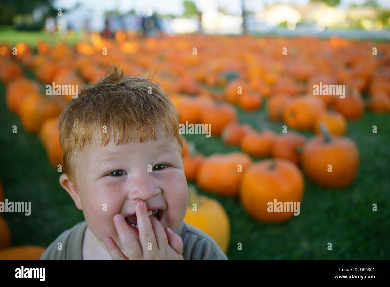 Oct 04, 2006; West Palm Beach, FL, USA; Two Year Old Joseph Holm Stands  Next To Rows Of Pumpkins At Trinity United Methodist Church In Palm Beach  Gardens ...