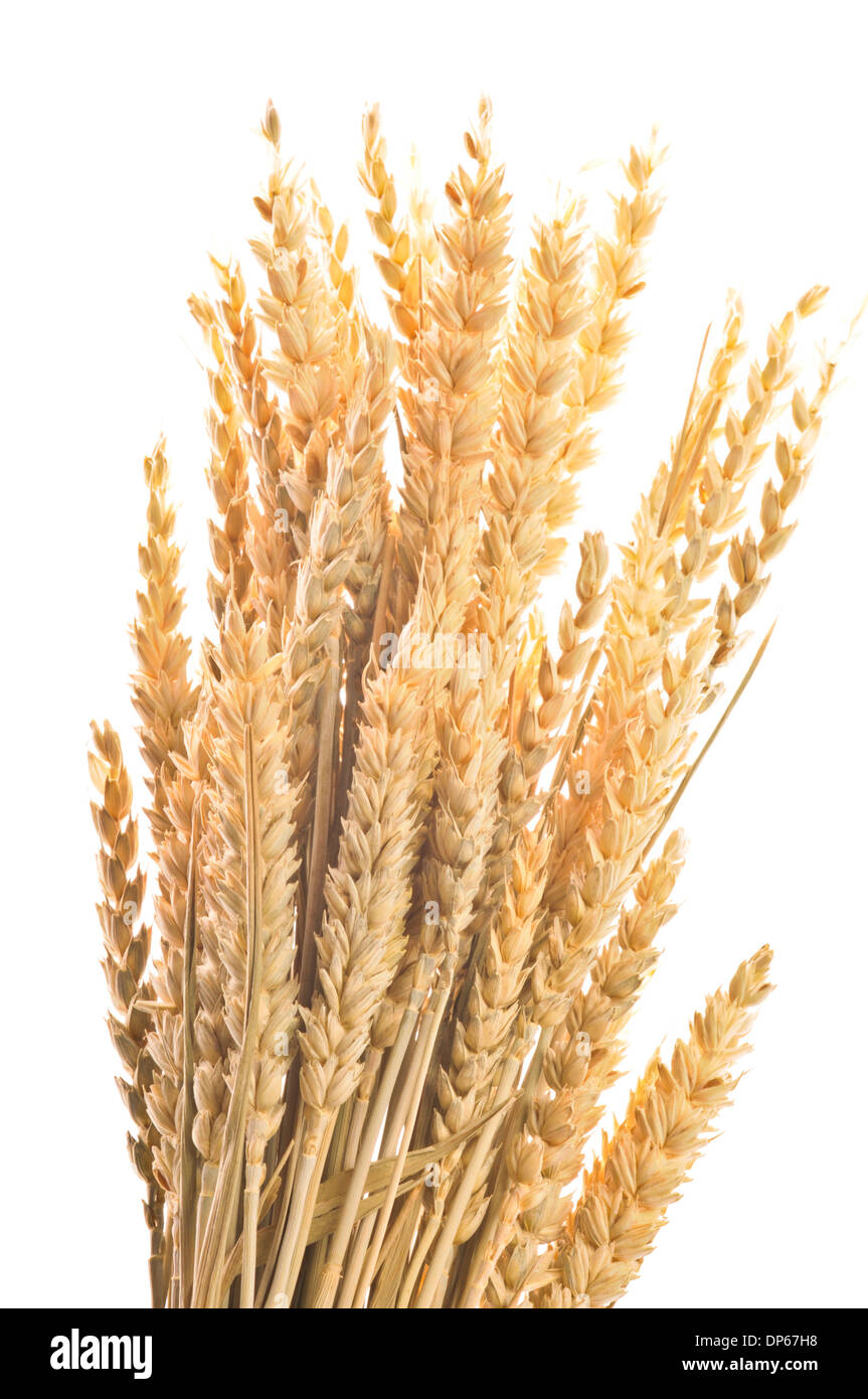 grain ears - Stock Image