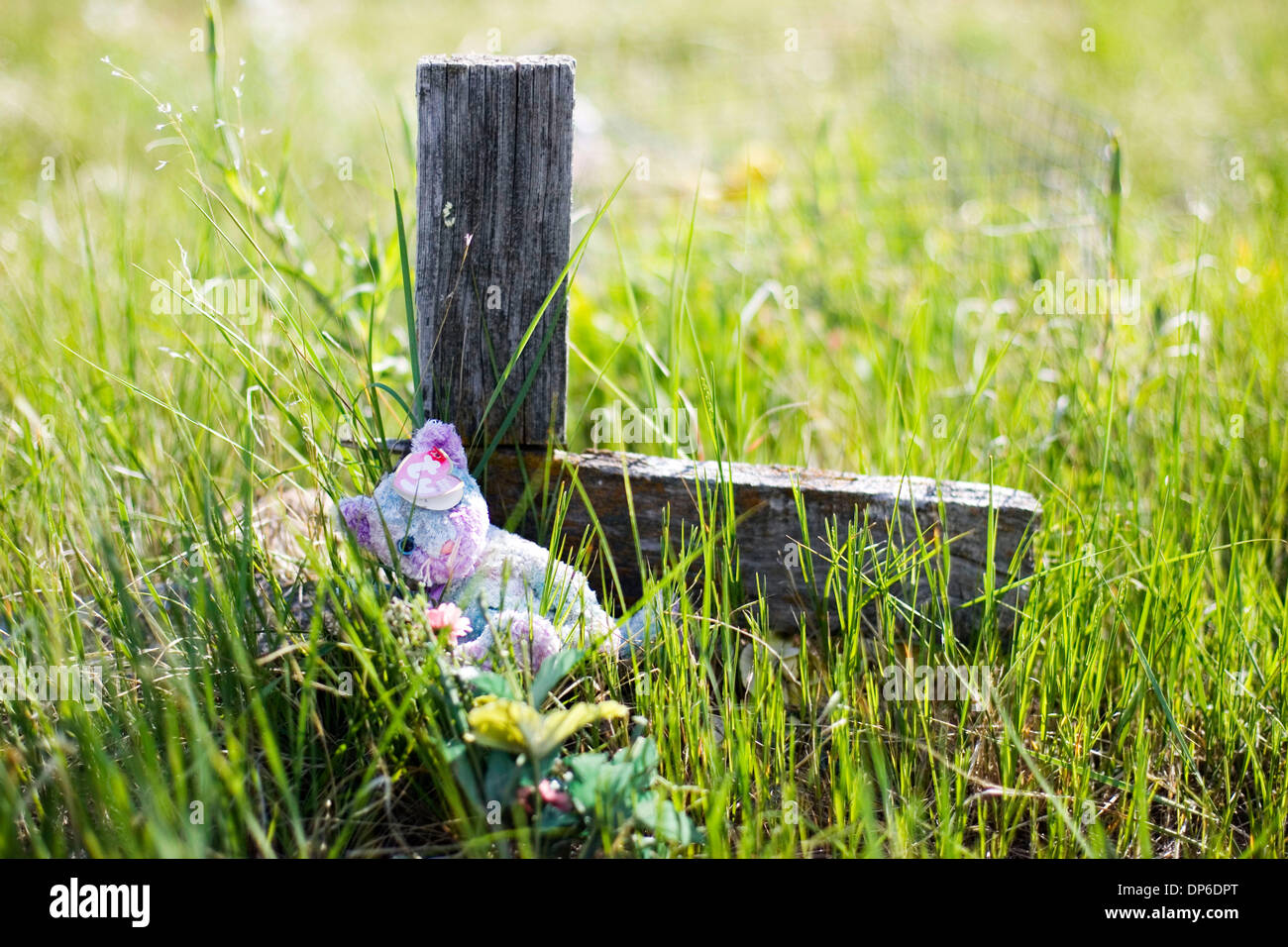 May 31, 2006 - Wounded Knee, South Dakota, USA - A teddy bear sits by a wooden cross at the Wounded Knee Massacre Stock Photo