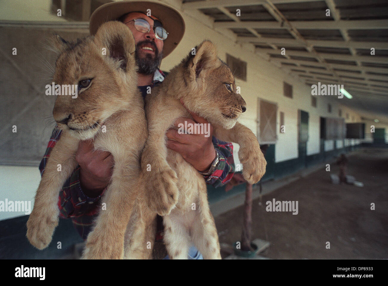 (PUBLISHED 02/01/2003, A-18): Dr. Alejandro Campos, with 10-week-old lion cubs at the nursery where he and his staff are caring for babies and sick animals. Tour groups come through constantly to visit the exotic animals he keeps there at the Aguas Calientes race track. Peggy Peattie photo - Stock Image