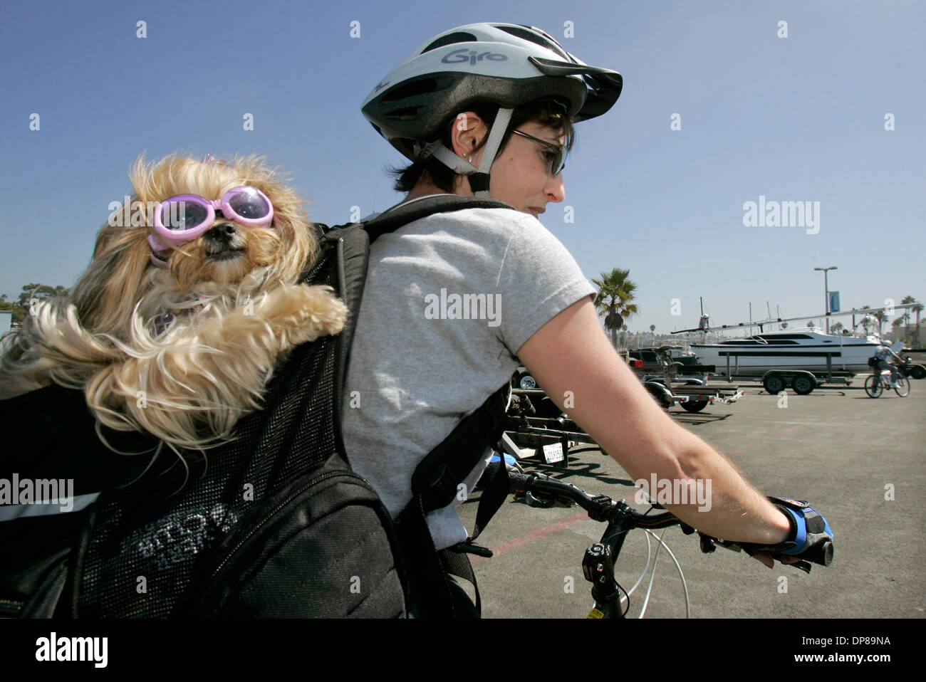 (Published 9/22/2006, NC-1, NI-1) September 20, 2006, Oceanside, California_Oceanside resident ANN WATTS has her small dog named Shanti, that's wearing sunglasses, in her backpack as she takes a bike ride along the water at the Oceanside Harbor. The dog is a Yorki/Shih tzu  mix and seems to be enjoying itself_photo by Charlie Neuman/San Diego Union-Tribune/Zuma Press. copyright 200 - Stock Image