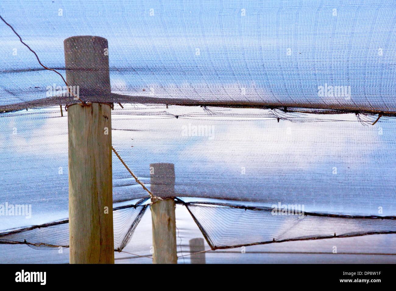 wooden poles supporting shade cloth for protection of seedlings - Stock Image