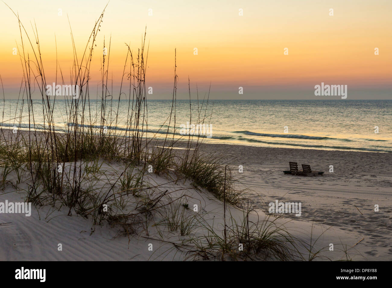 Sea oats on sand dunes at Gulf Shores Alabama beach - Stock Image