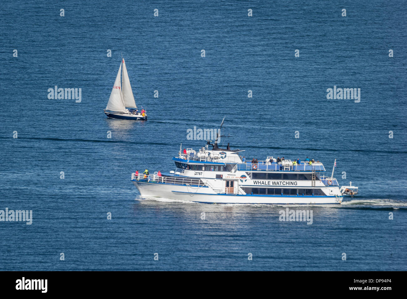 Tourist on Whale Watching boat and small sailboat, summertime, Reykjavik, Iceland - Stock Image