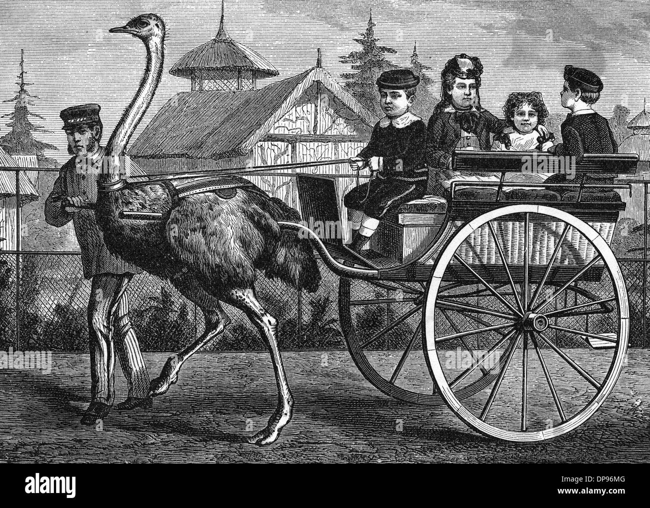 TRANSPORT/BY OSTRICH - Stock Image