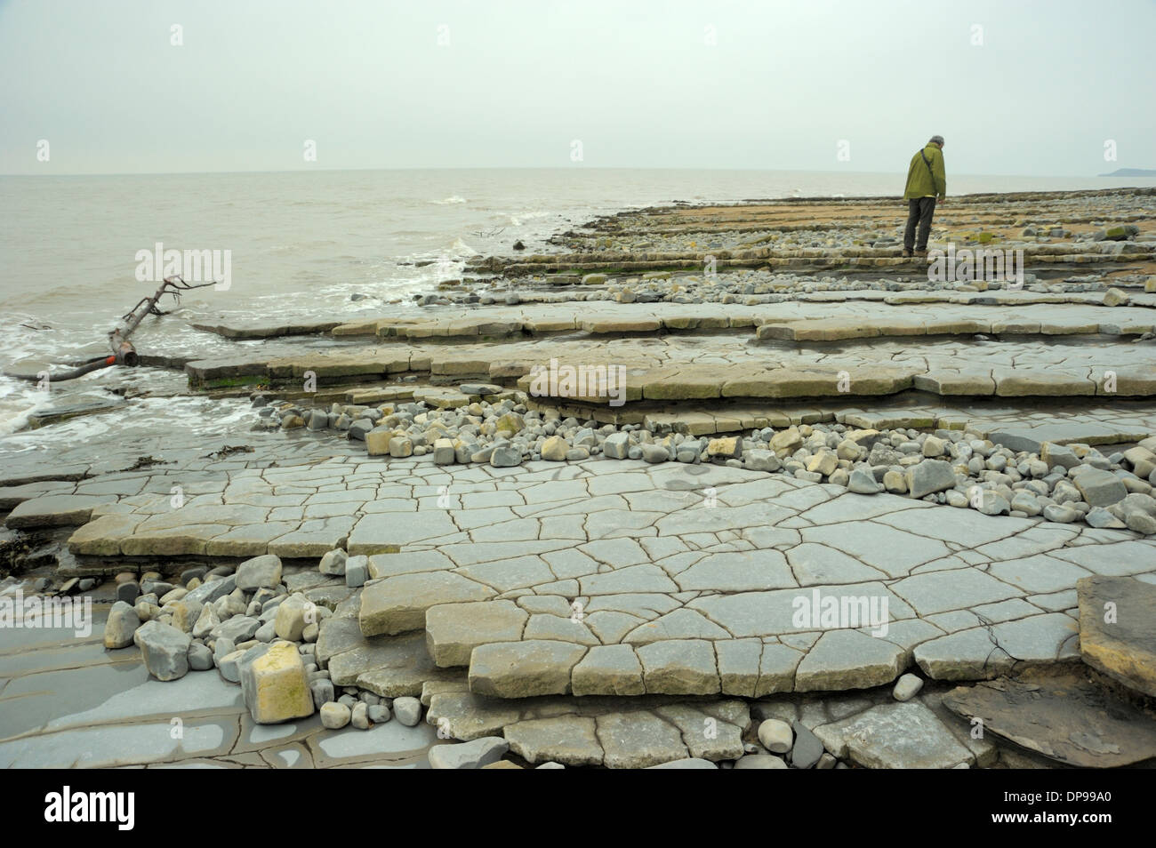 Remarkable Paving-like Strata at Lavernock Point - Stock Image