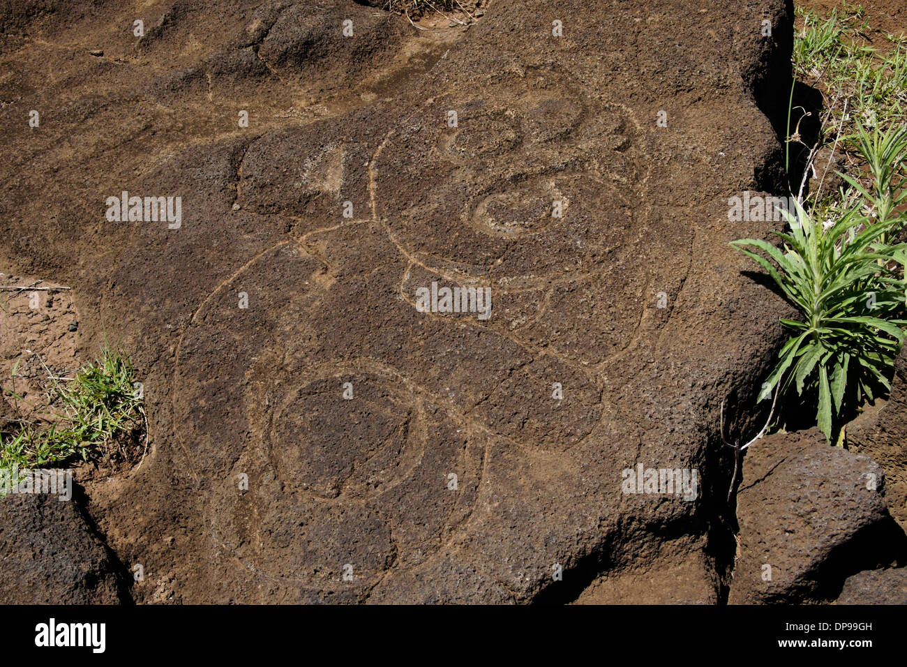 Petroglyph in volcanic rock, Easter Island, Chile - Stock Image