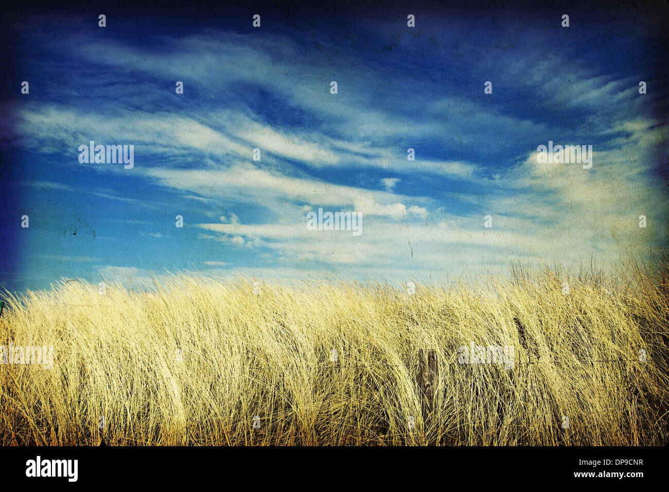 View through long maram grass sand dunes out to sea - Stock Image