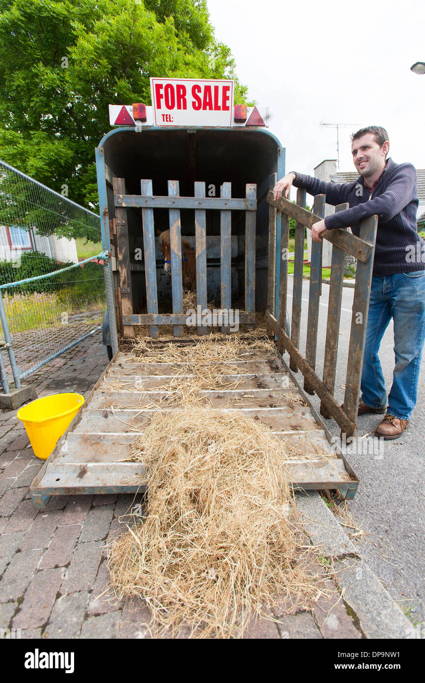 A man sells small ponies from a horse trailer at the weekly market in the center of Ballyshannon in Donegal - Stock Image