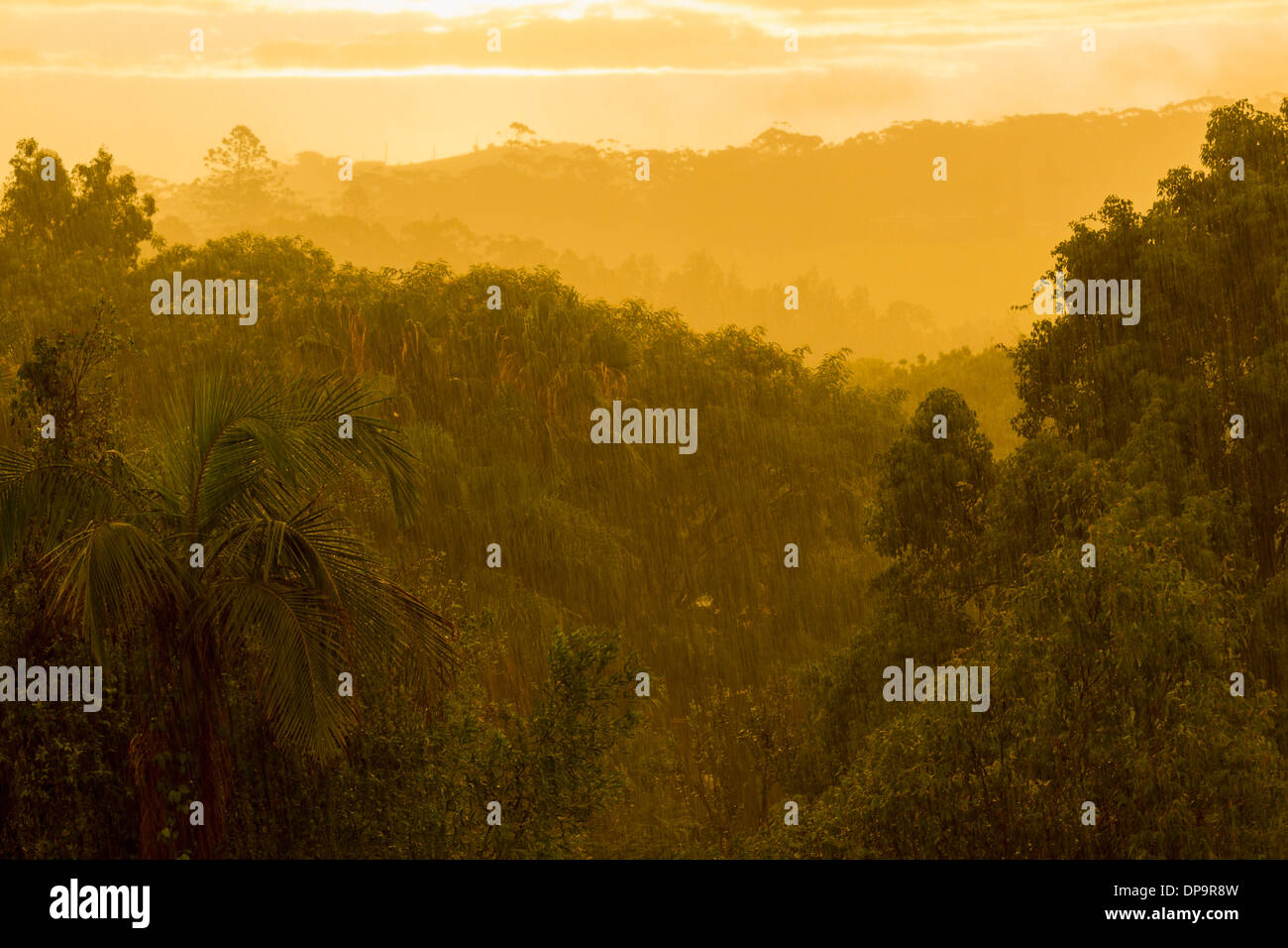 Monsoon rain in a rainforest at sunset - Stock Image