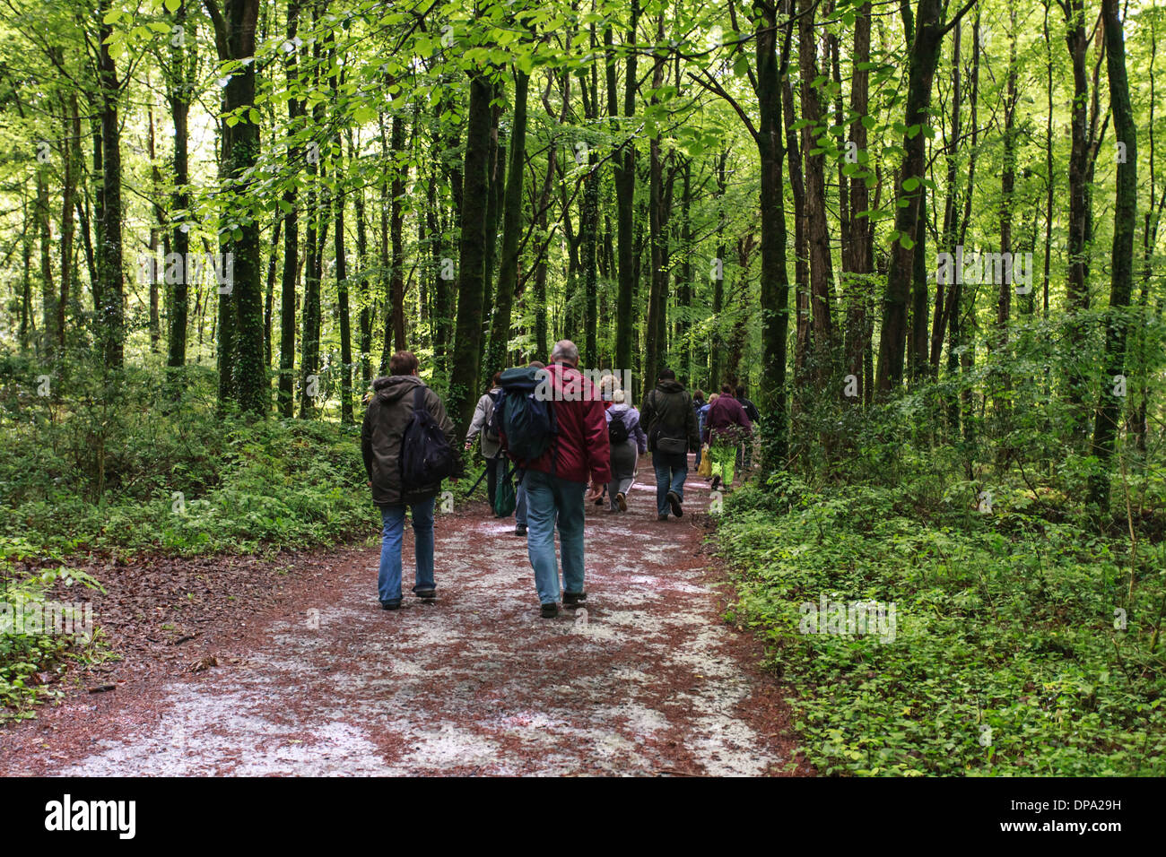 A group of walkers in forest or woodland at the Burren National Park, County Clare, Ireland Eire - Stock Image