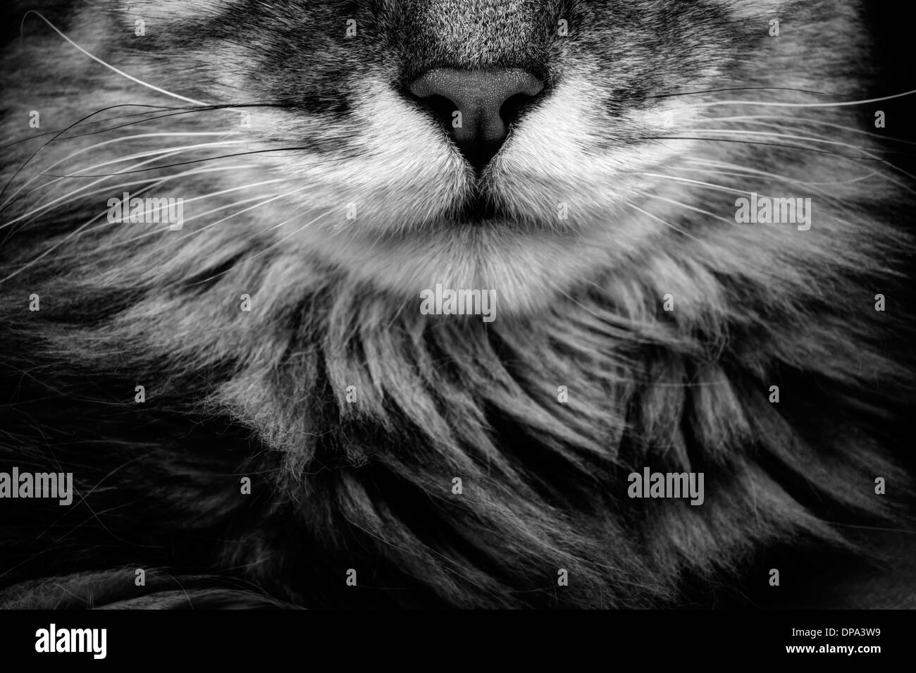 Cat portrait. Close up. Detail - Stock Image