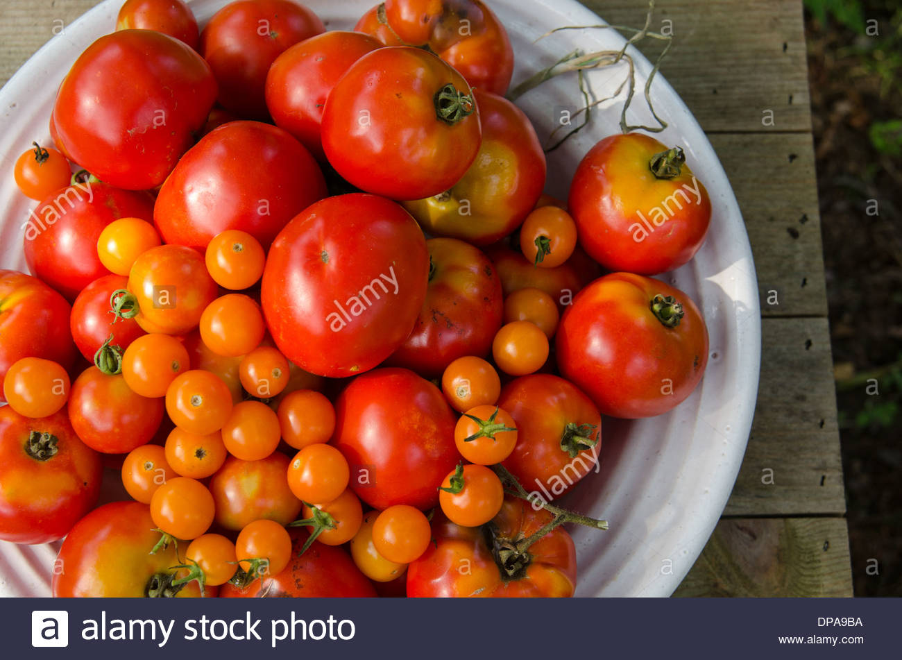 Close-up of dish of freshly picked garden tomatoes of different sizes outdoors on wooden table. - Stock Image