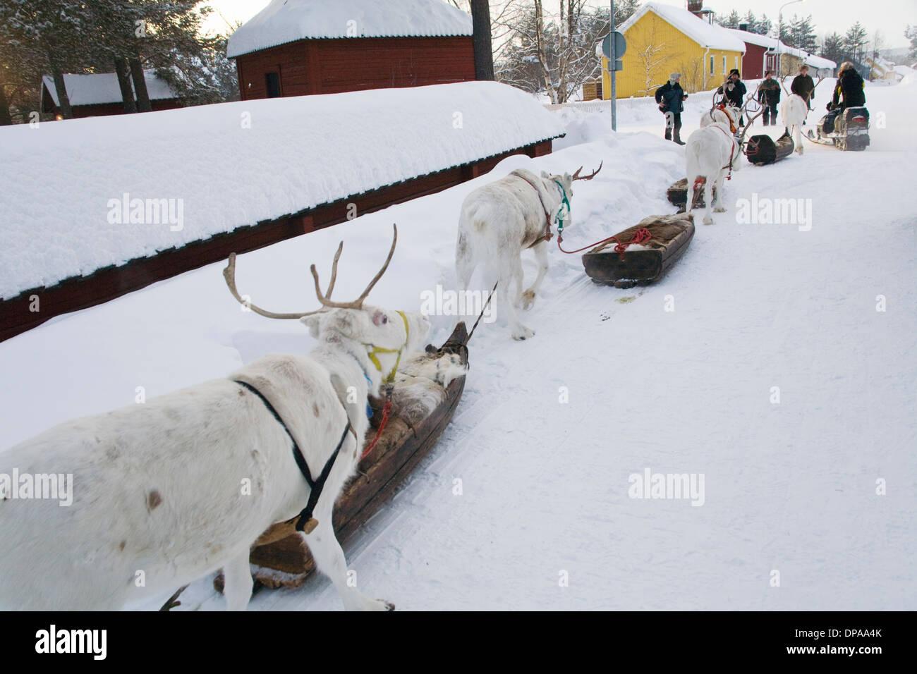 Reindeer caravan Laplander culture Jokkmokk fair Laponia Sweden - Stock Image