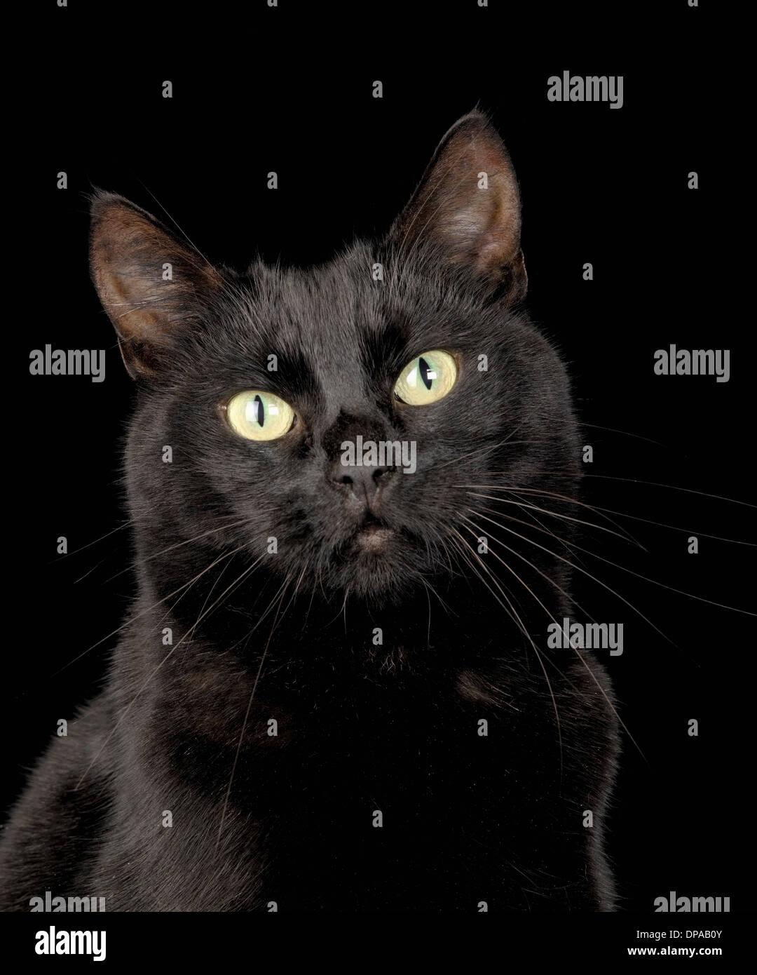 Black cat - Stock Image