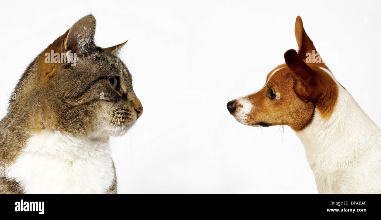 Cat and dog looking at each other - Stock Image