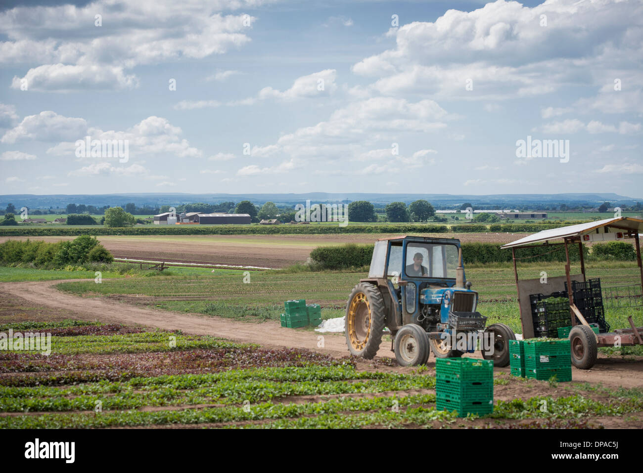 Workers driving tractor - Stock Image